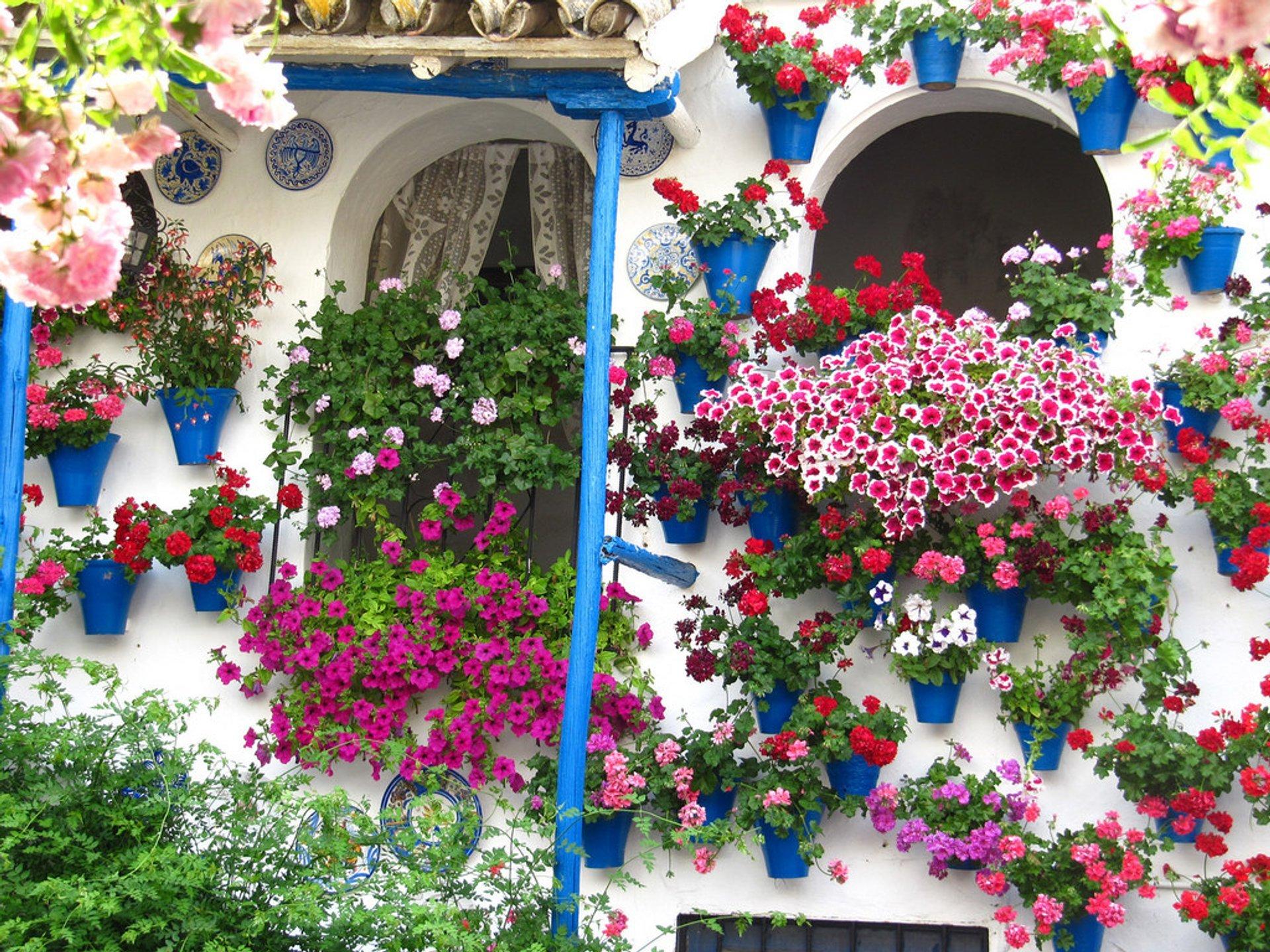 Córdoba Patios Festival in Spain - Best Time