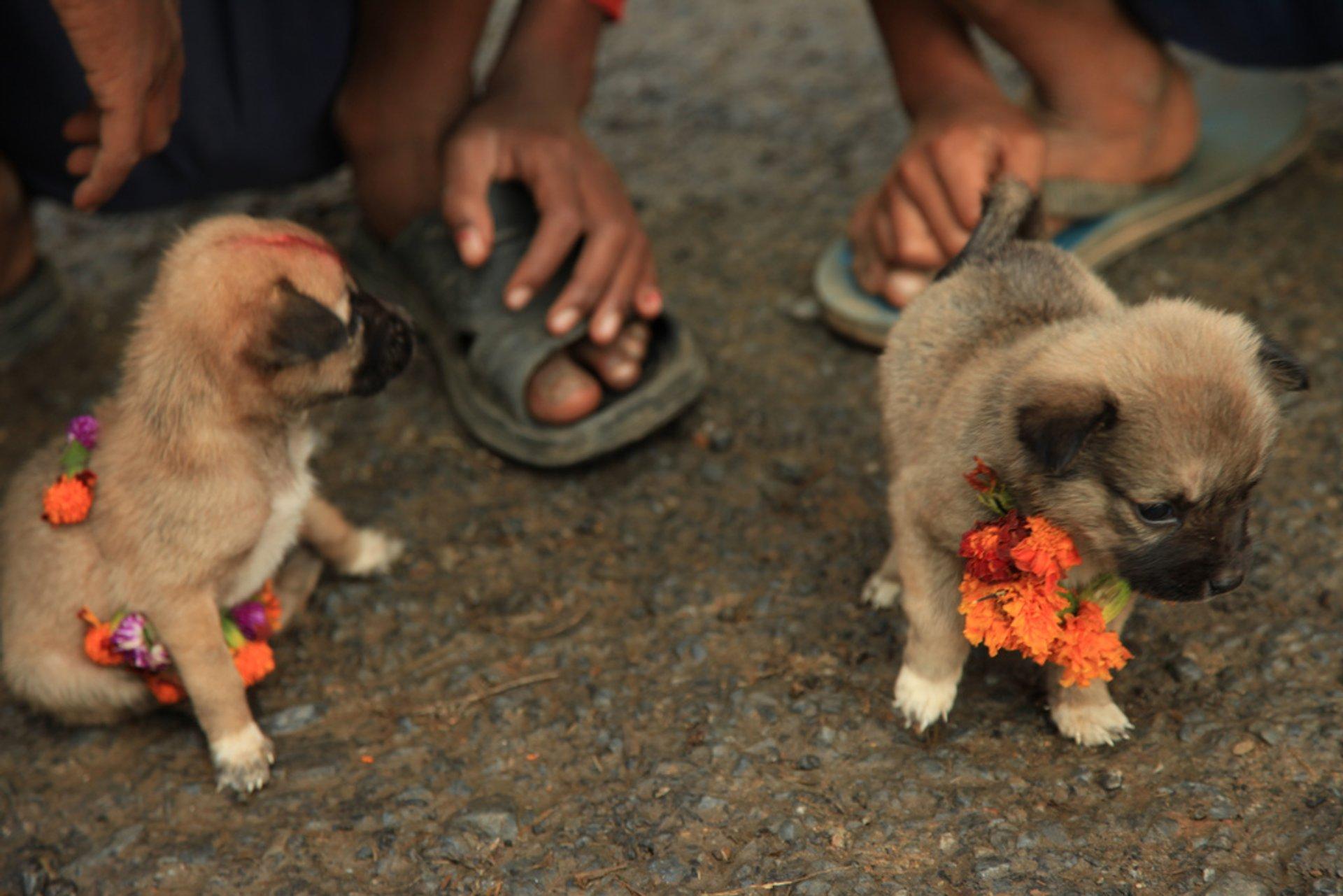 Best time for Kukur Tihar, Nepal Dog Festival in Kathmandu