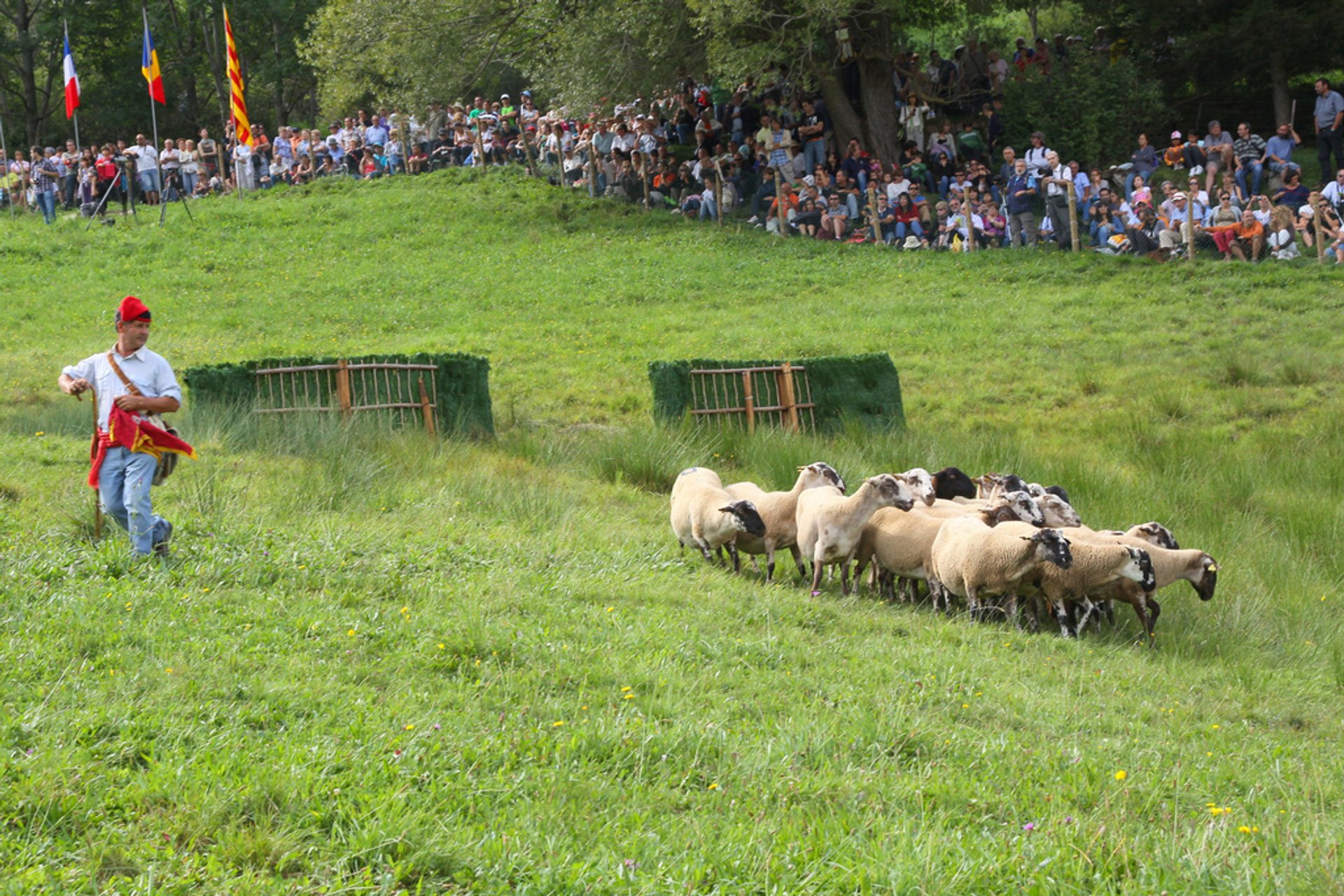 """Gossos d'Atura"" (Sheep Dog) Competitions in Barcelona - Best Season 2020"