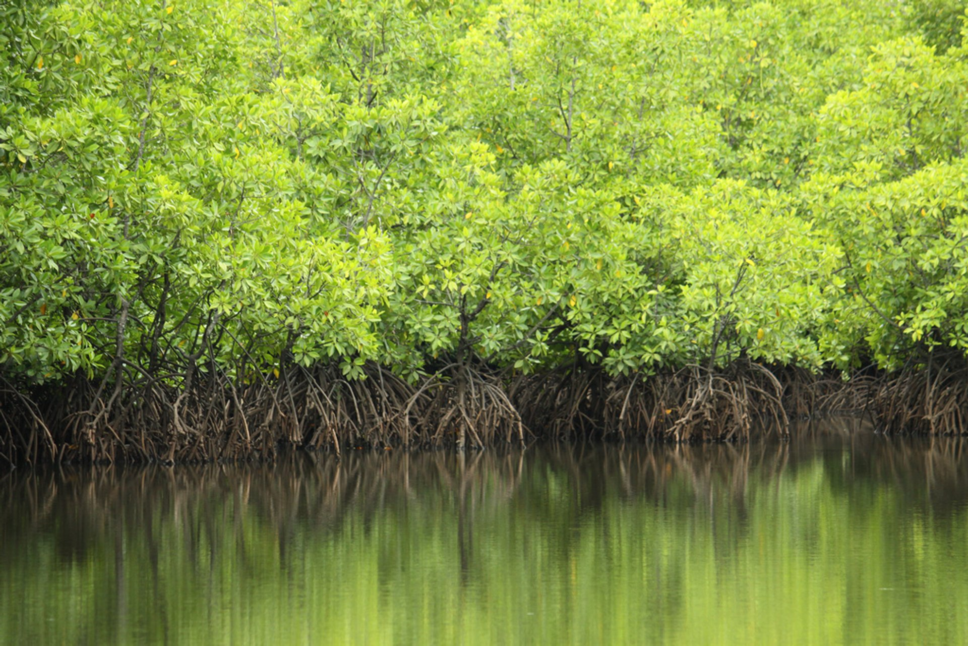 Mangrove Forests in Malaysia 2019 - Best Time