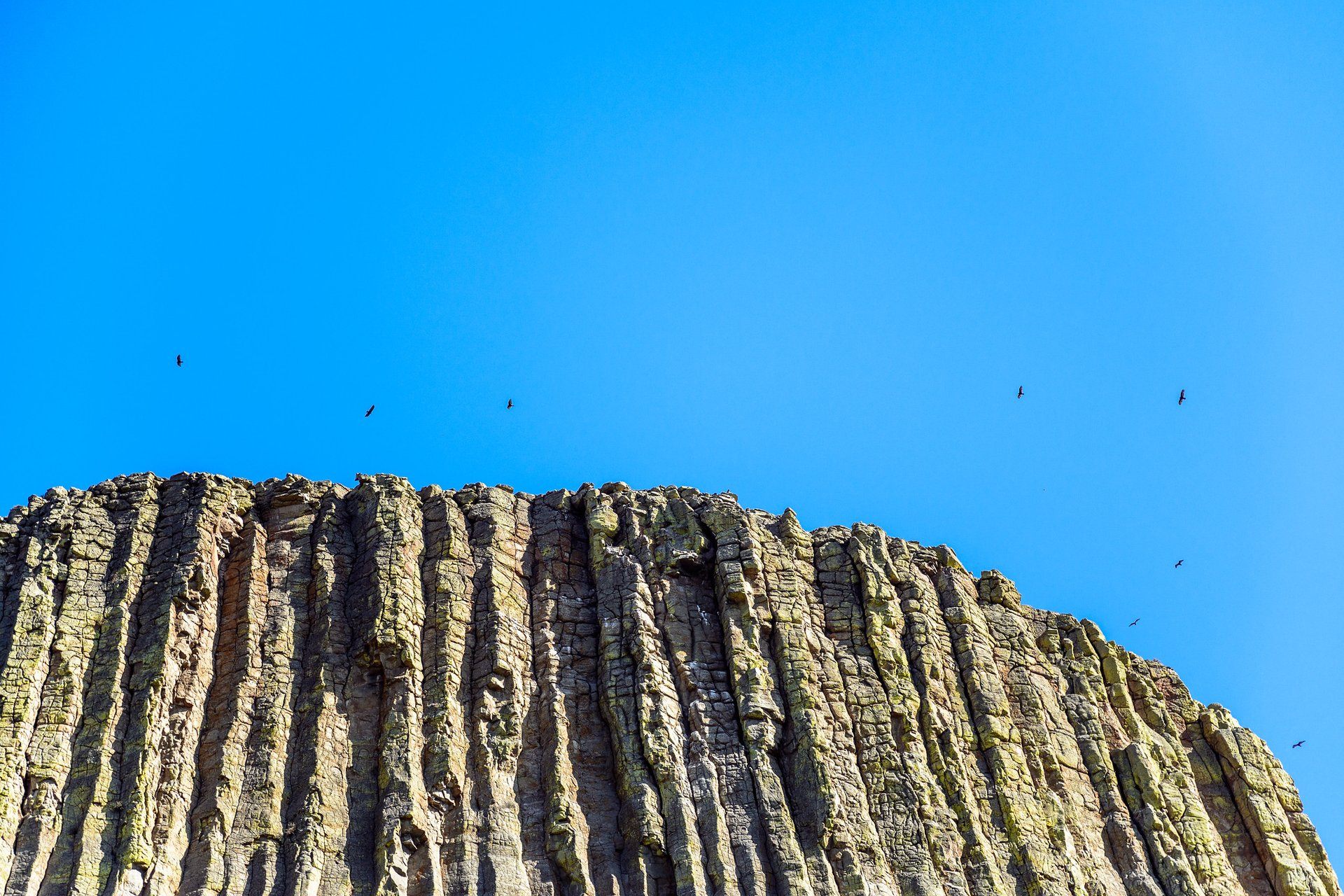 Birds over the Devils Tower National Monument 2019
