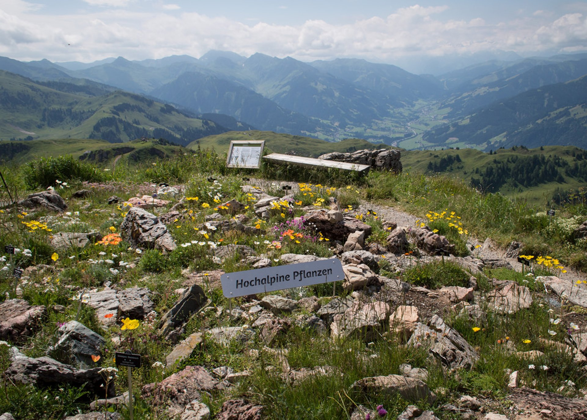 Alpine Flower Garden Kitzbüheler Horn in Austria - Best Season 2020