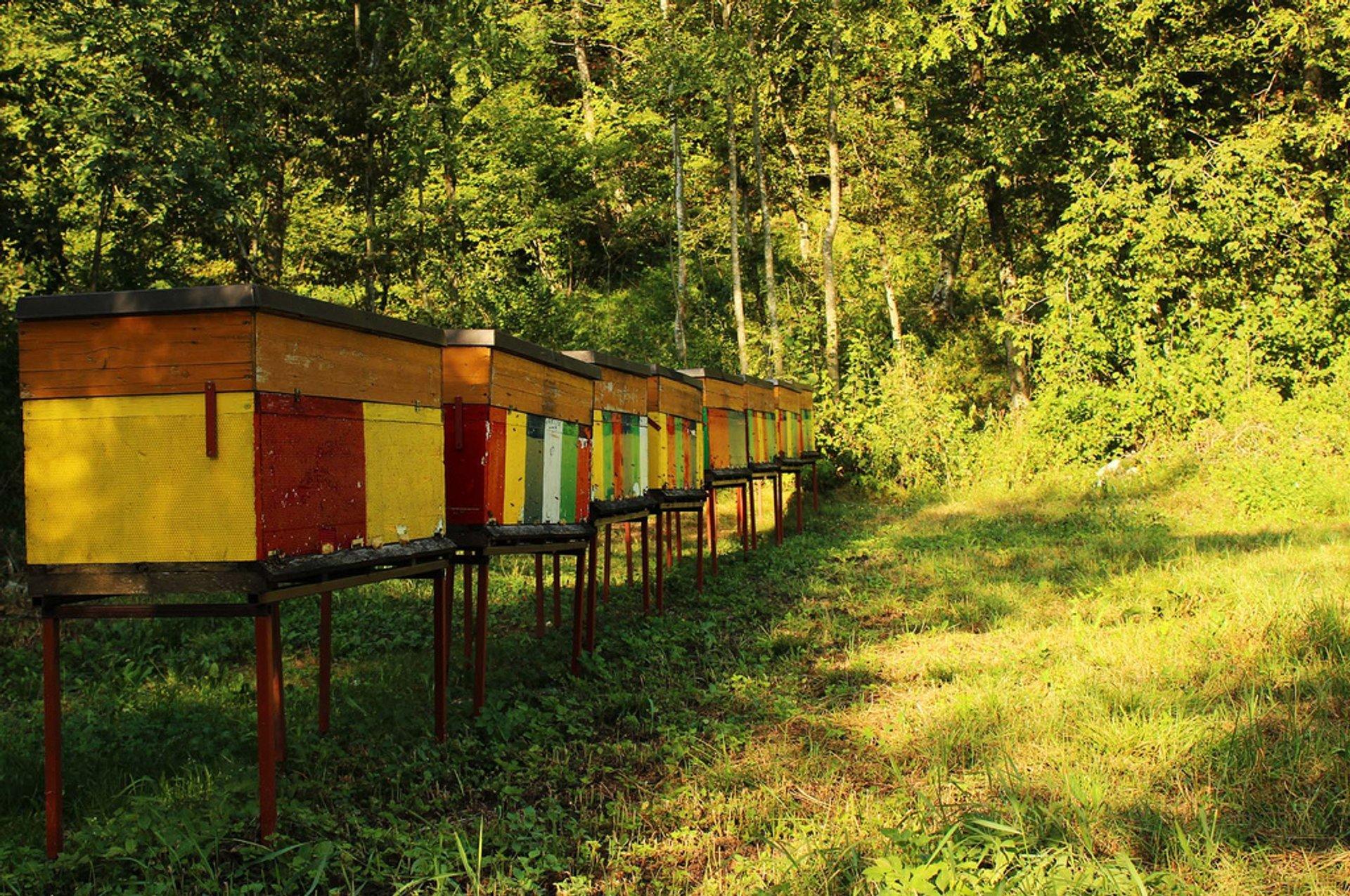 Best time for Honey in Slovenia 2020