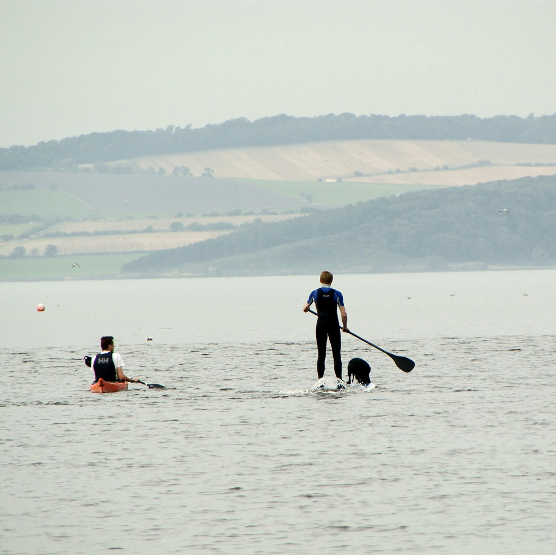 Paddling to Cramond Island: closer view of man and dog on surf board 2020