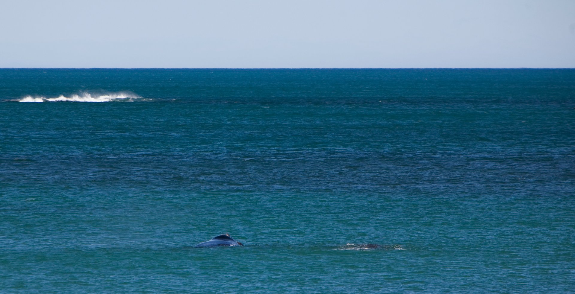 Whale Watching in South Australia - Best Season 2020