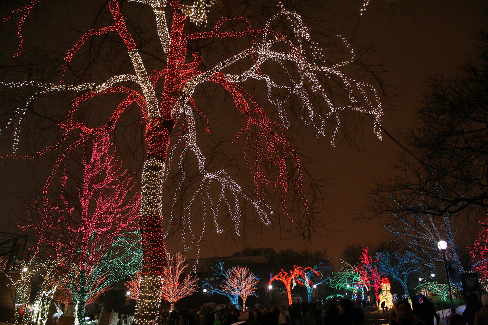 Best time for ZooLights in Chicago 2020