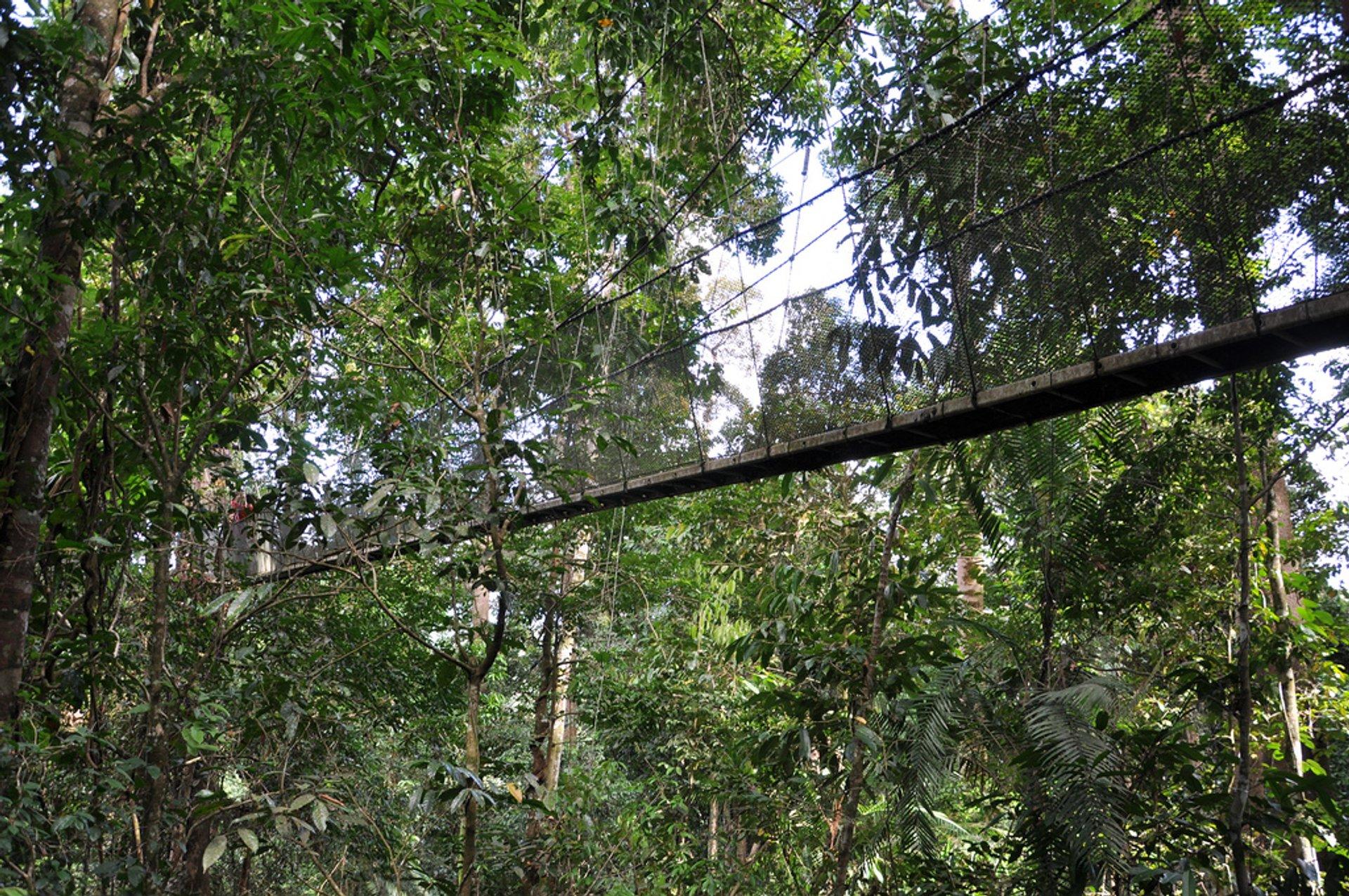 Parting shot of the rope bridge in Kota Kinabalu 2020
