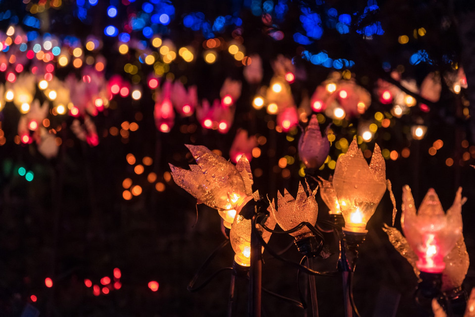 VanDusen Festival of Lights in Vancouver 2020 - Best Time