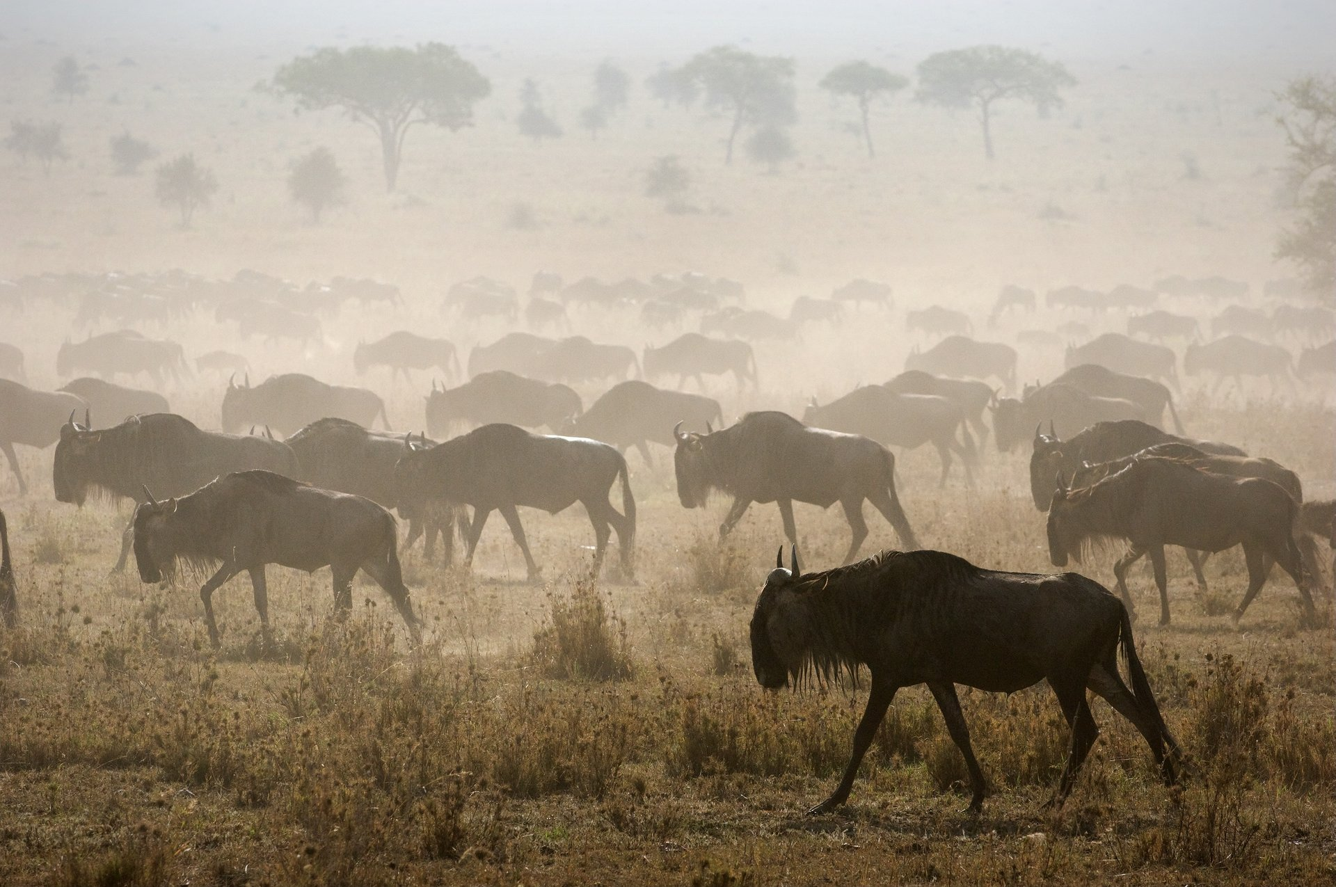 Wildebeest Migration in Kenya - Best Time