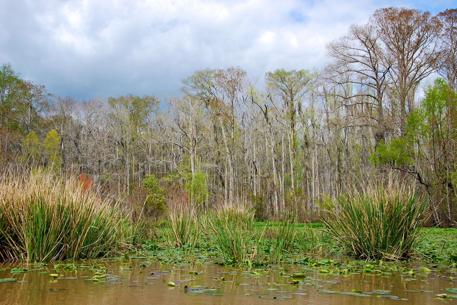 Honey Island Swamp 2020
