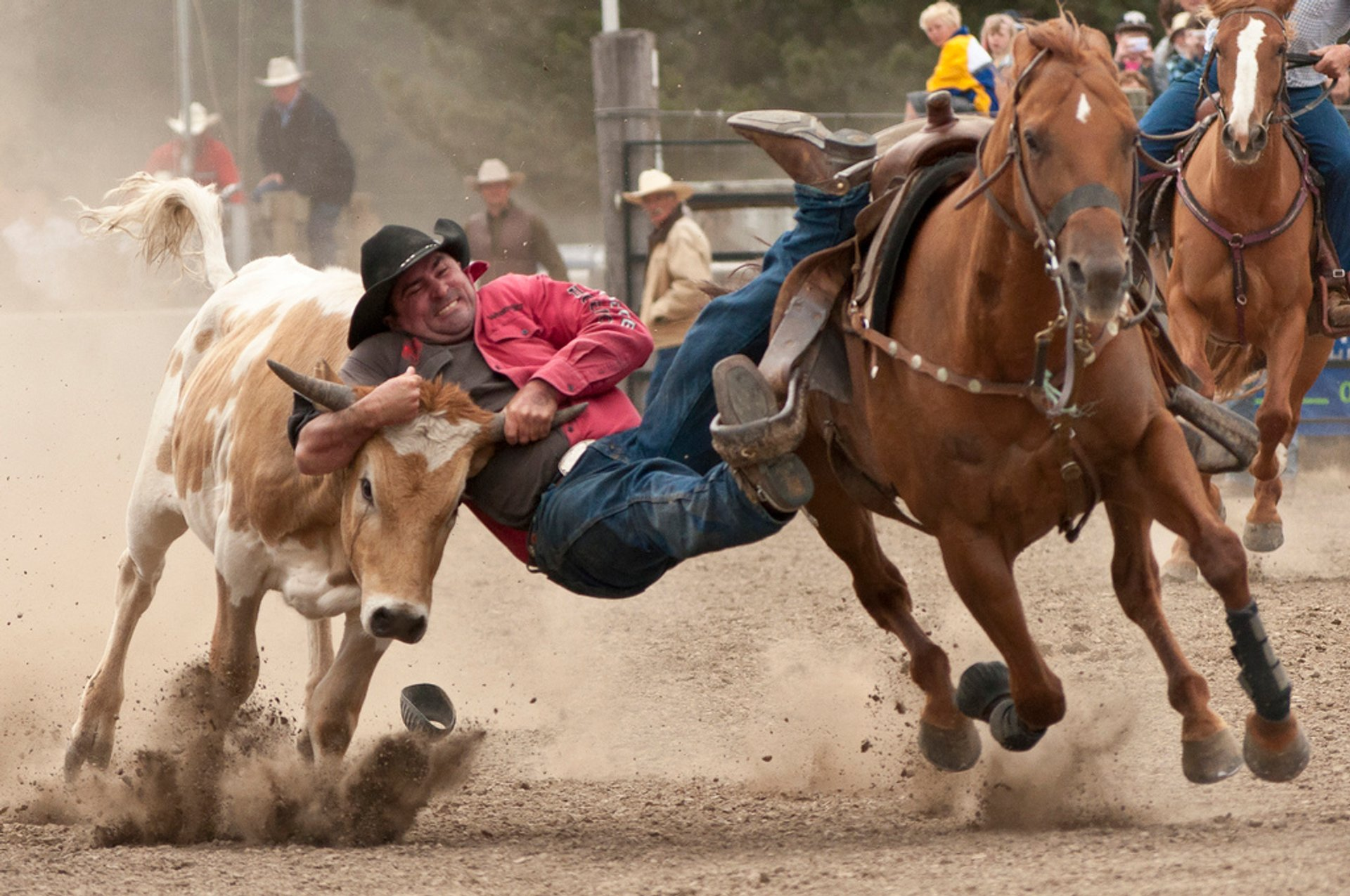 Rodeo in New Zealand - Best Season 2020