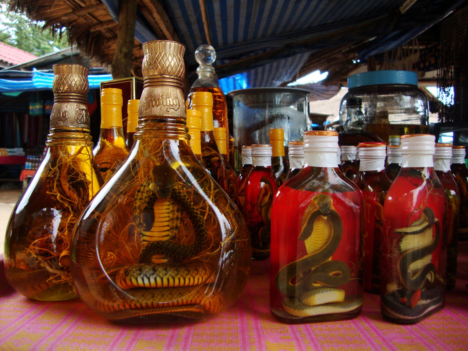 Lao-Lao Whiskey in Laos 2019 - Best Time