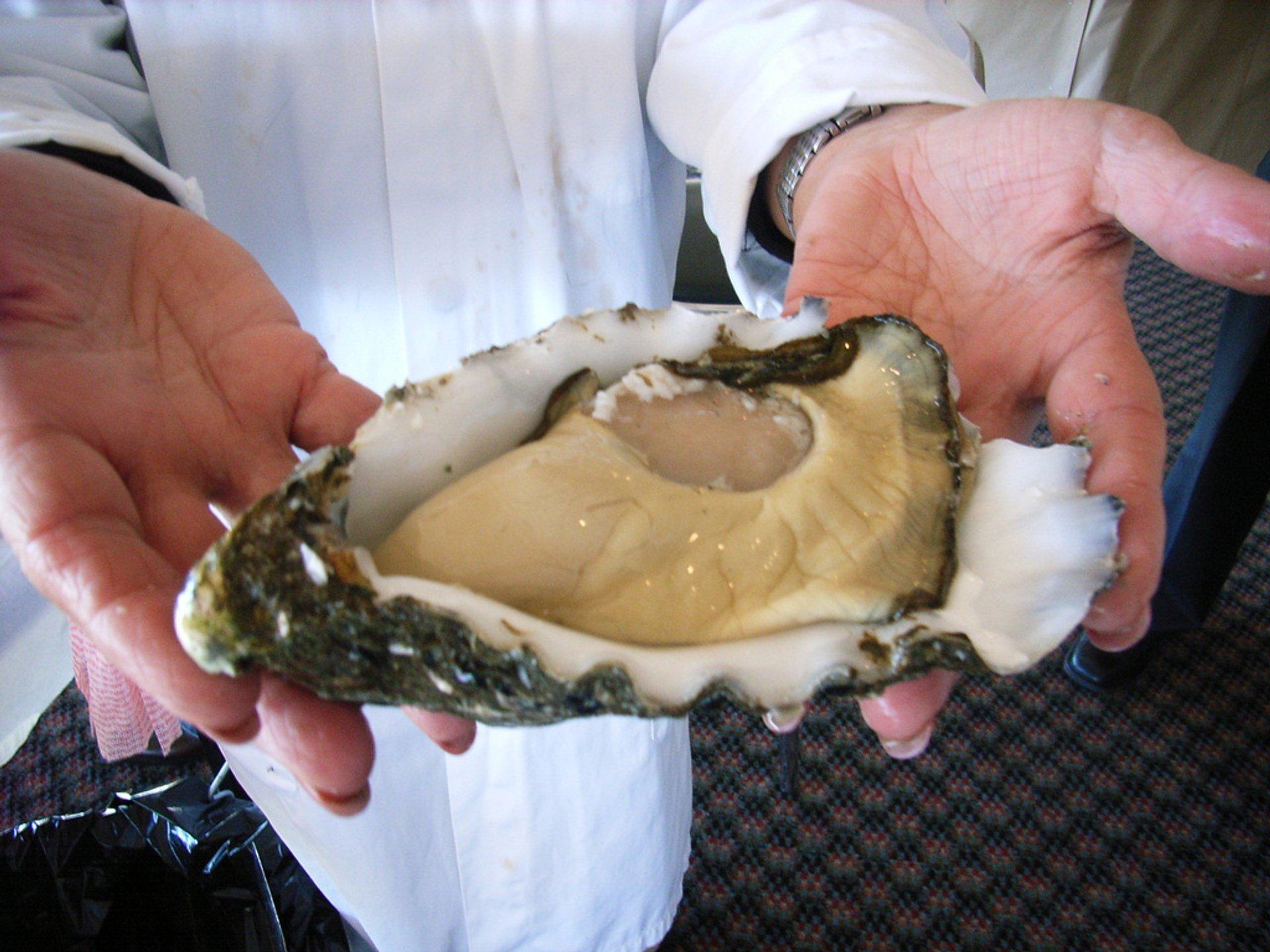 Pacific Oysters in Tasmania - Best Season 2020