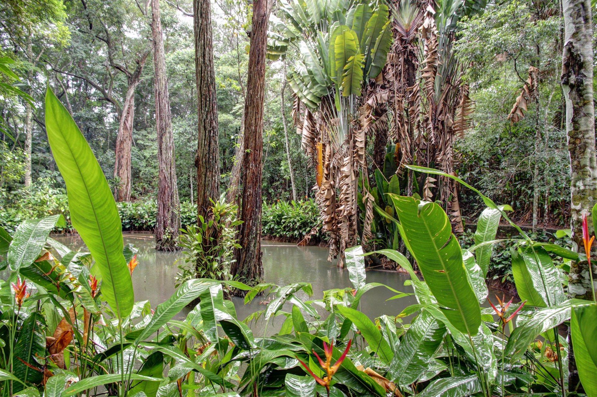 Tijuca Forest in Rio de Janeiro - Best Season 2020