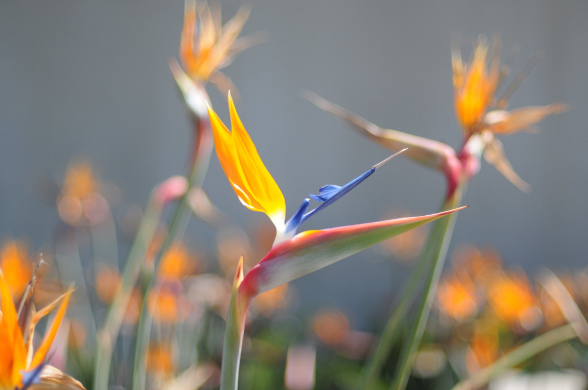 Bird of Paradise in Los Angeles - Best Season 2020