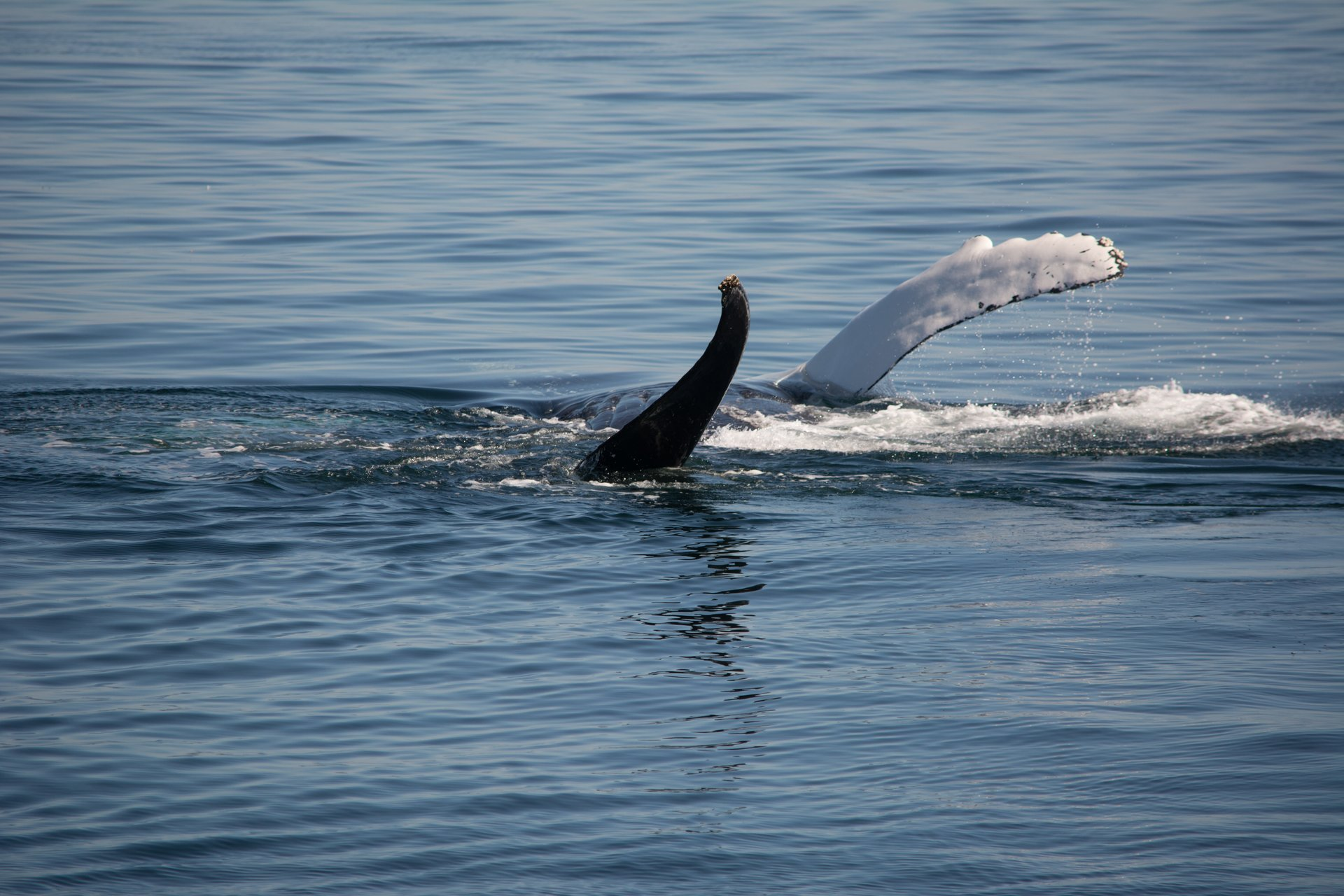 Whale watching in Plymouth Harbor 2019