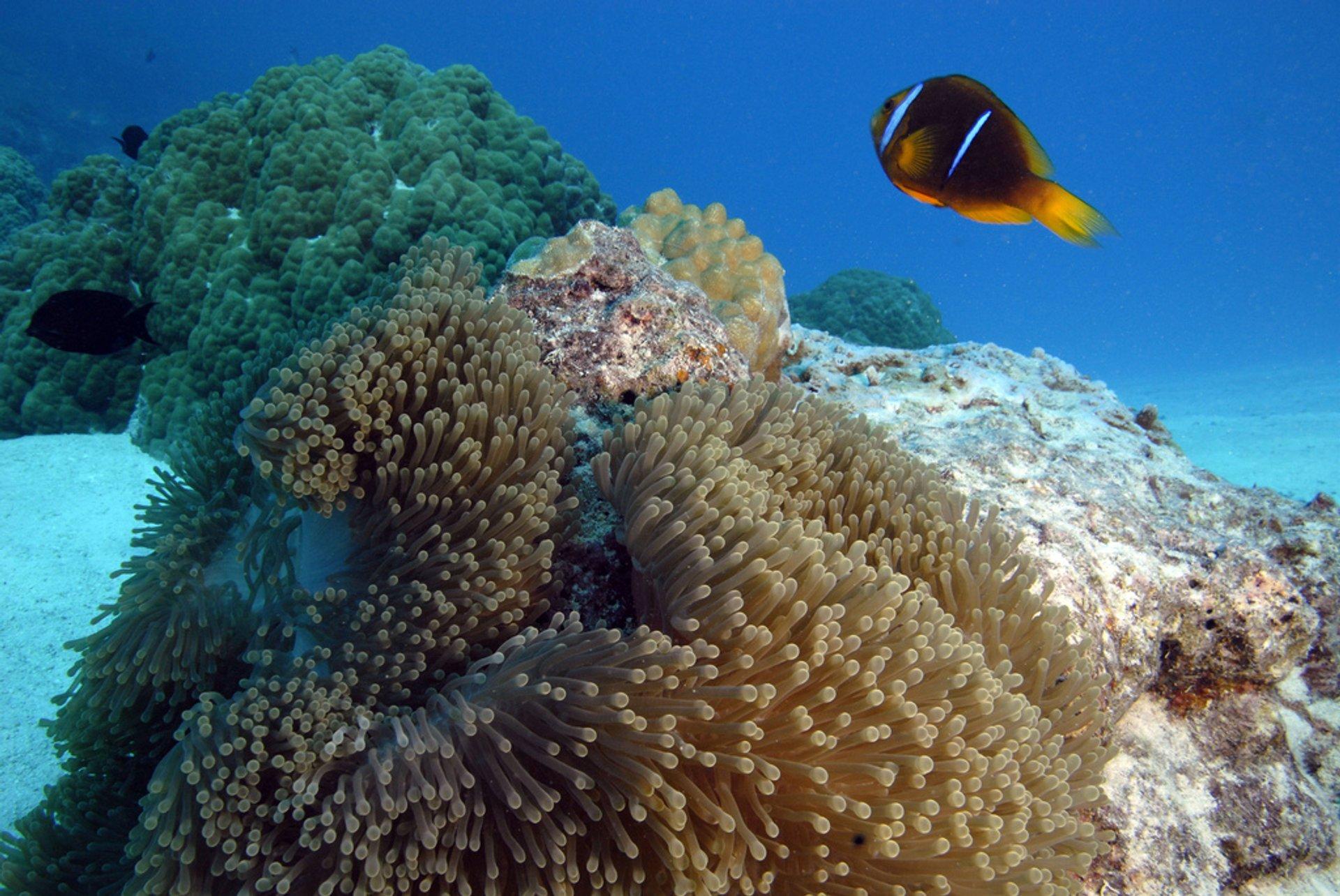 Diving and Snorkeling around Tahiti in Tahiti - Best Season 2019