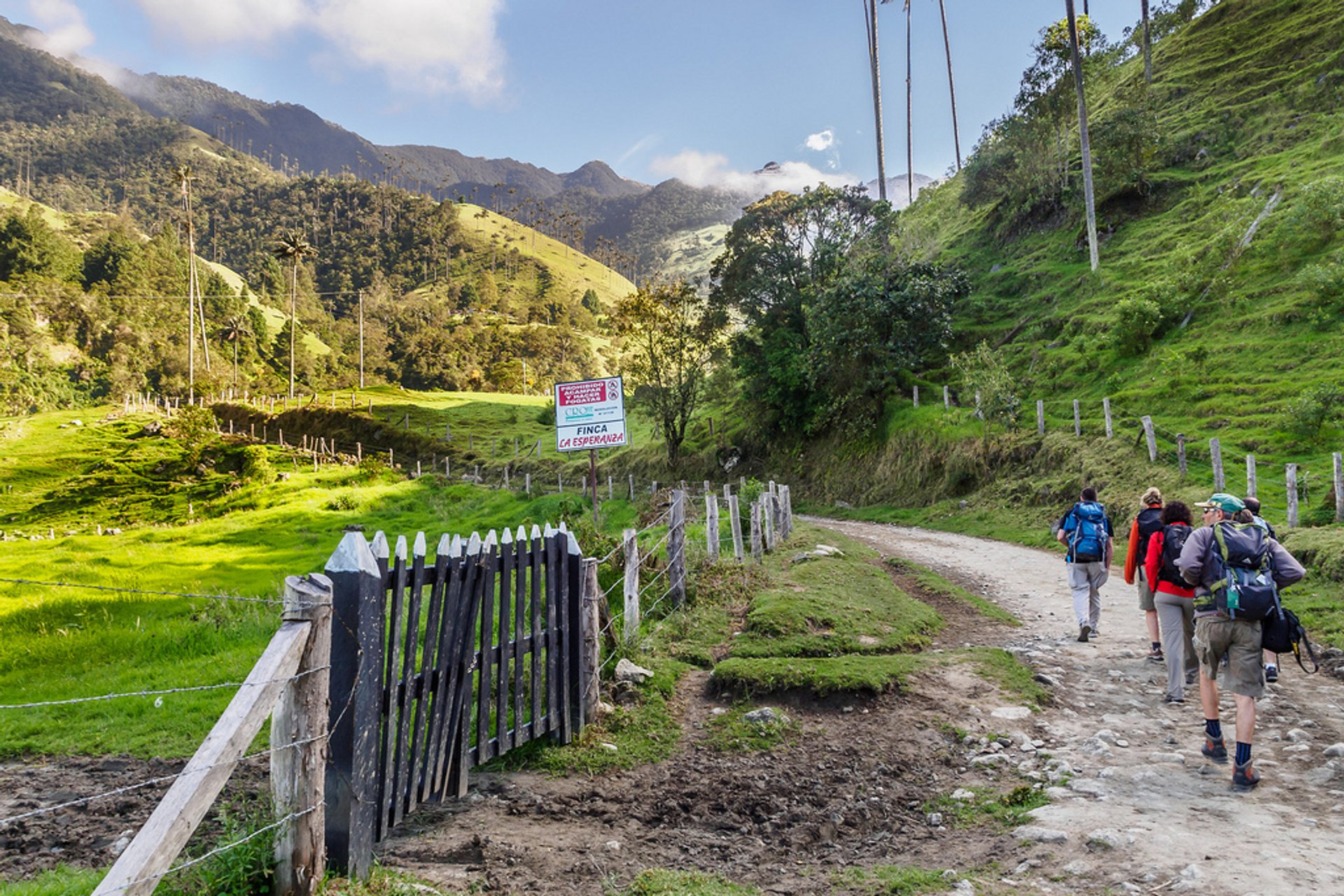 Trekking in the Cocora Valley in Colombia - Best Season 2020