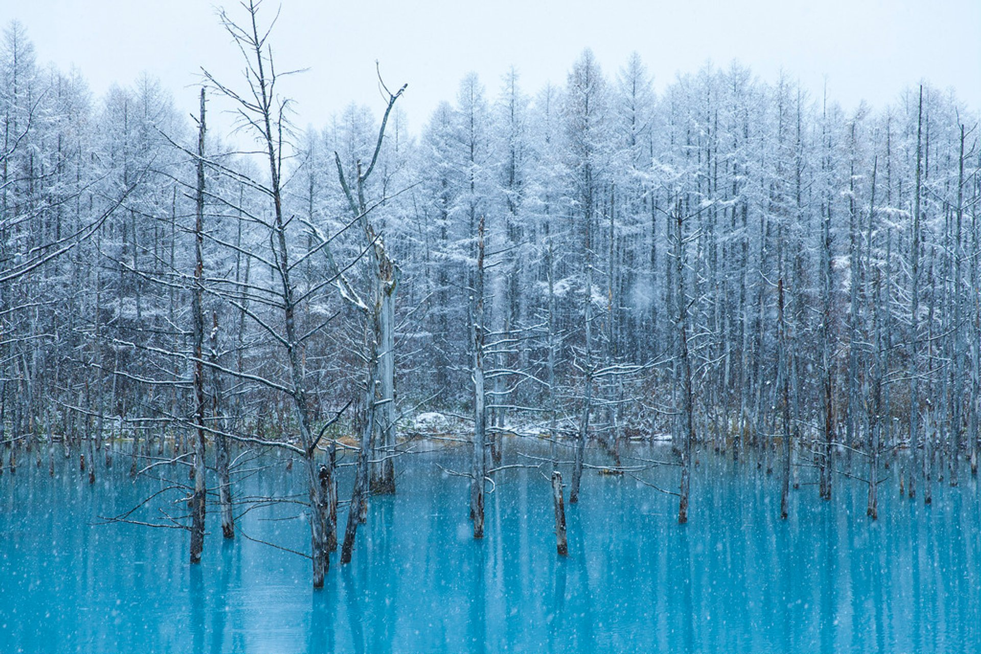 Winter Magic of Biei Blue Pond in Japan - Best Season