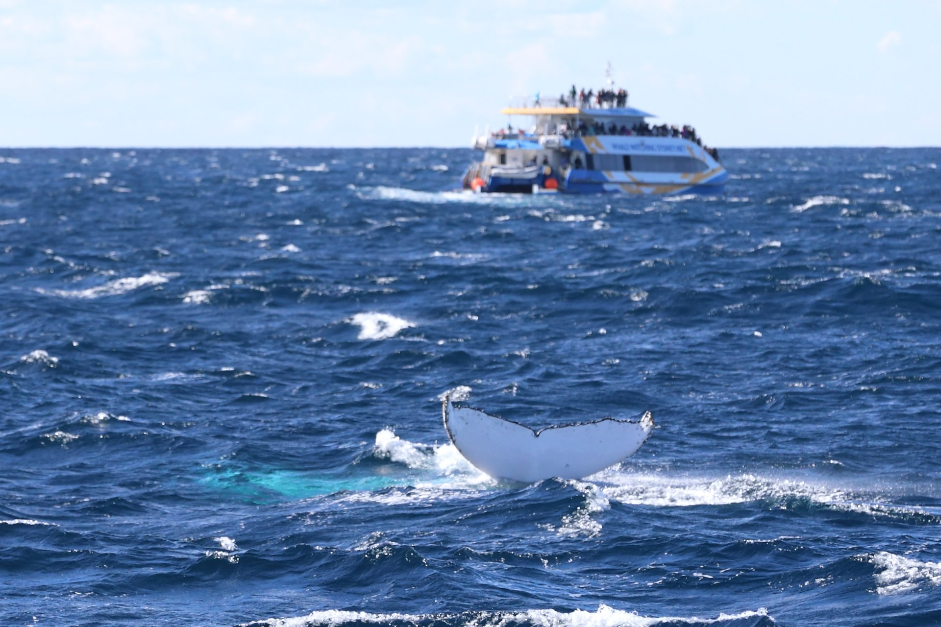 Whale & Dolphin Watching in Sydney - Best Season 2019