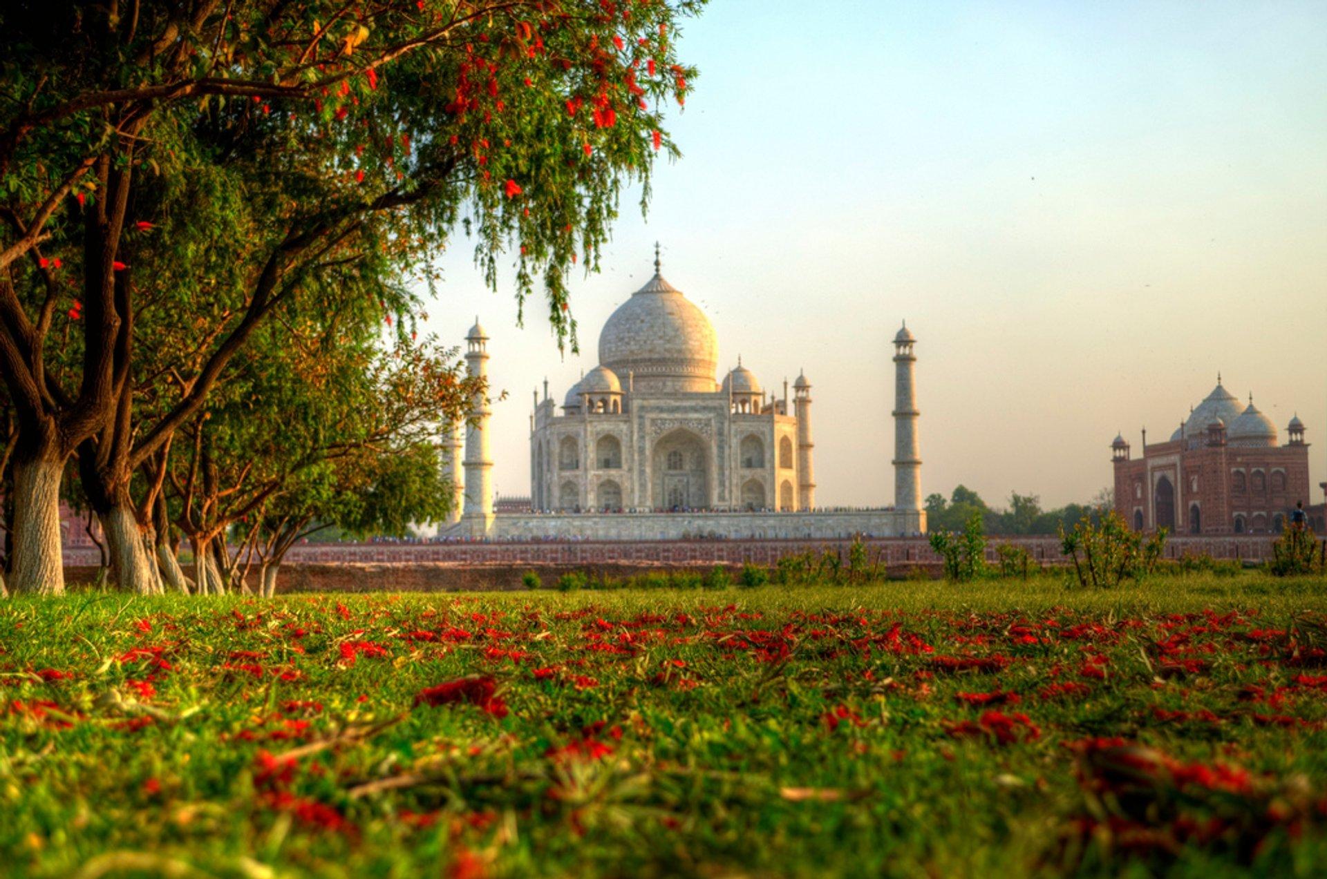 Taj Nature Walk Blooming in Taj Mahal and Agra  - Best Season 2019