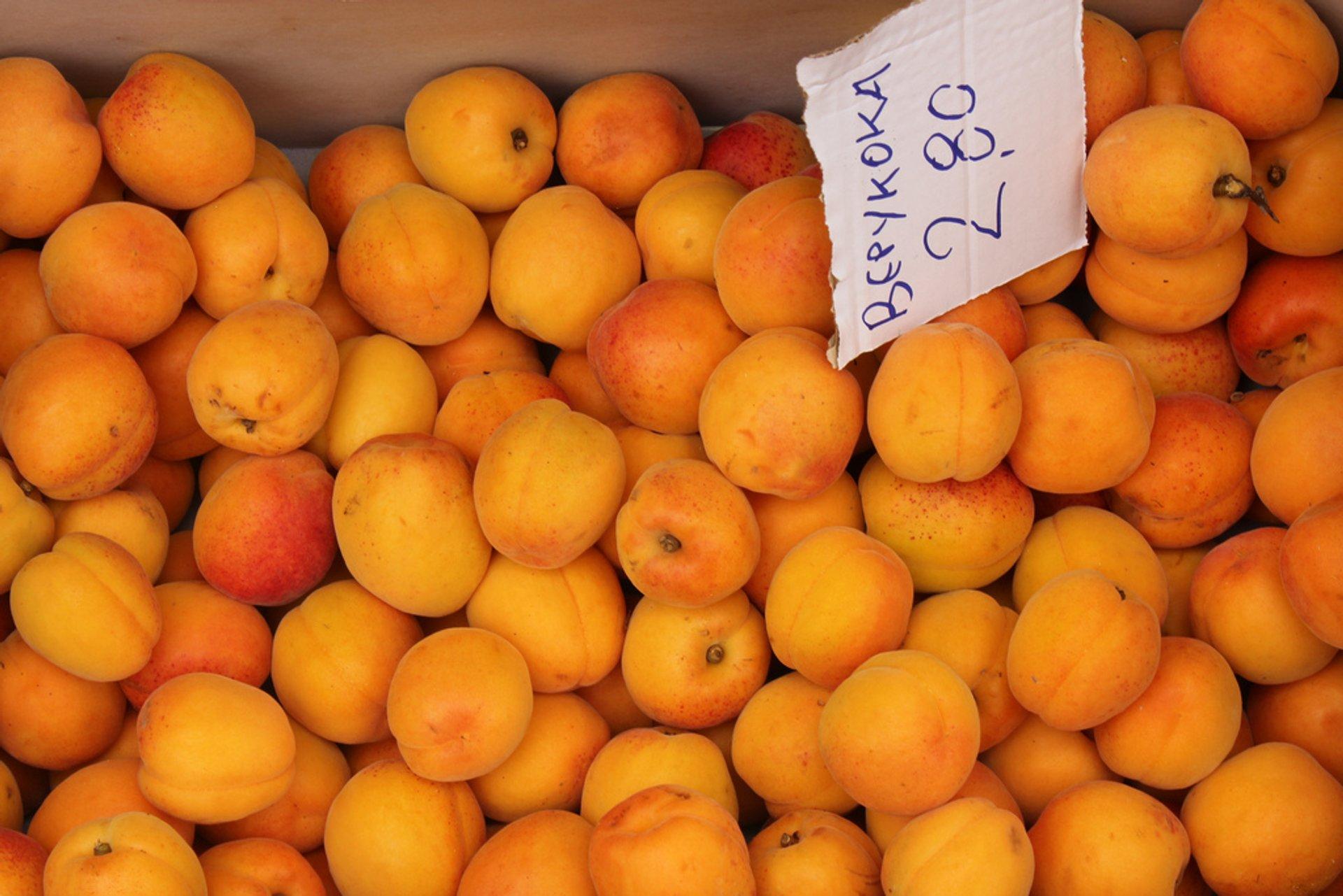 Apricots, Kefalonia island 2019