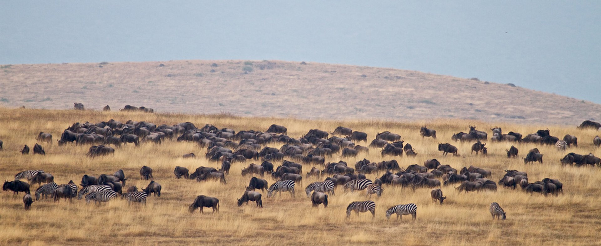 Best time for Ngorongoro Crater in Tanzania 2020