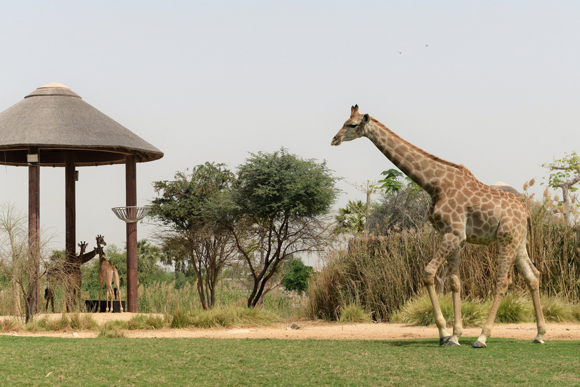 Dubai Safari Park in Dubai 2020 - Best Time