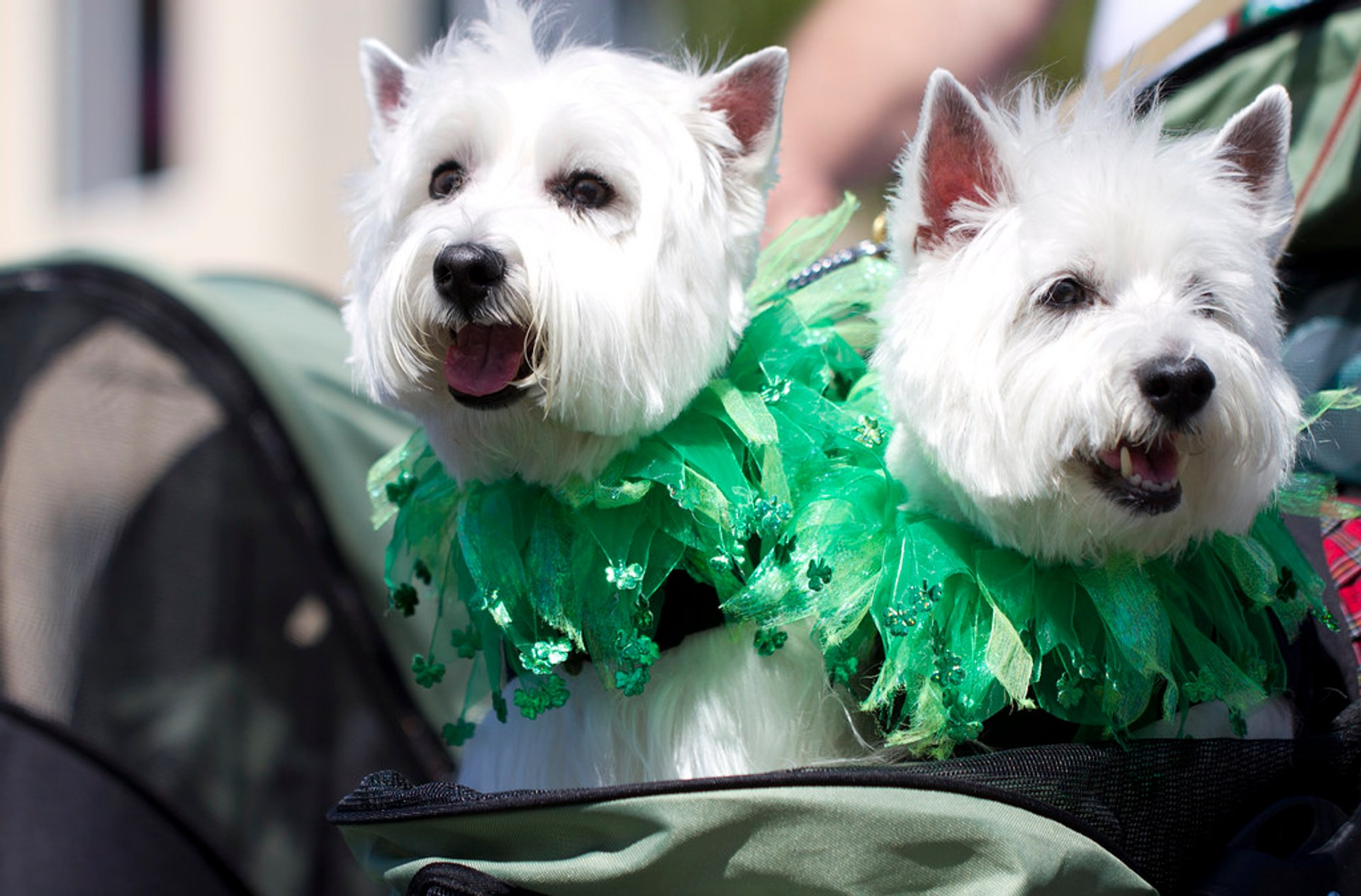 Best time for St. Patrick's Day Parade & Festival in San Diego 2019