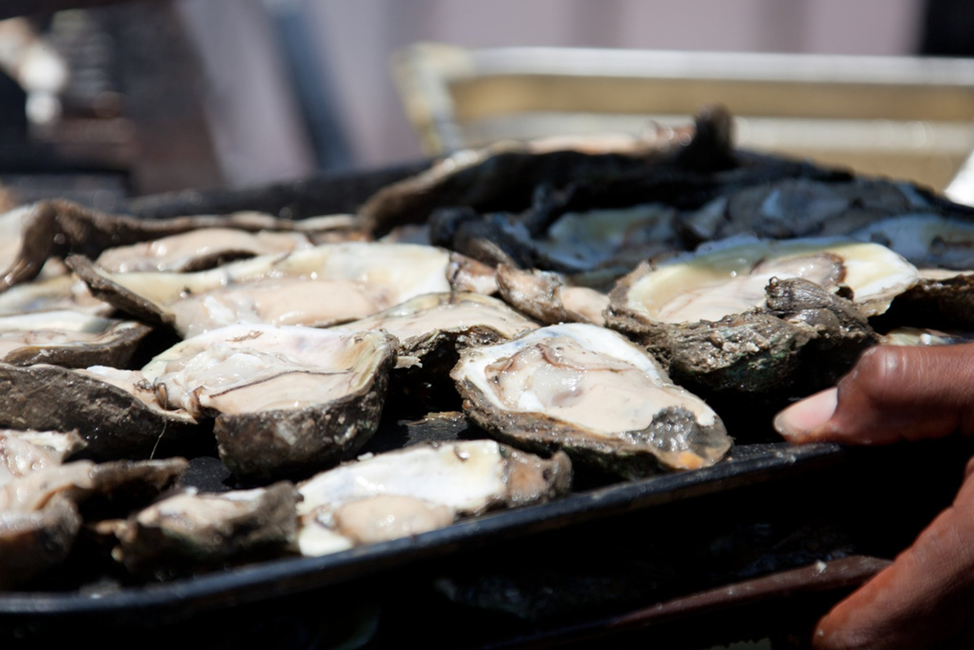 New Orleans Oyster Festival in New Orleans 2020 - Best Time