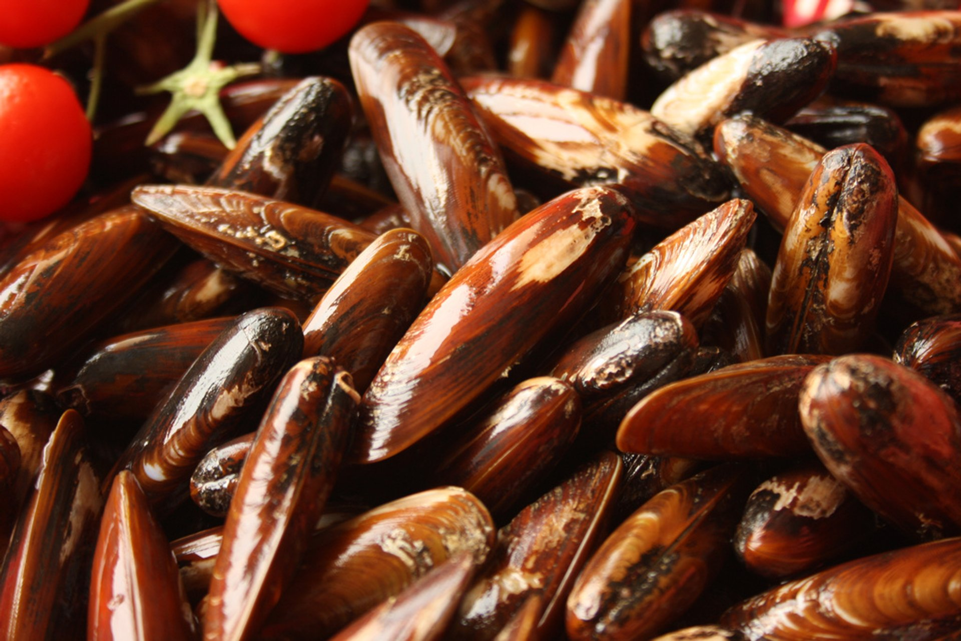 Mussel Season in Albania 2020 - Best Time