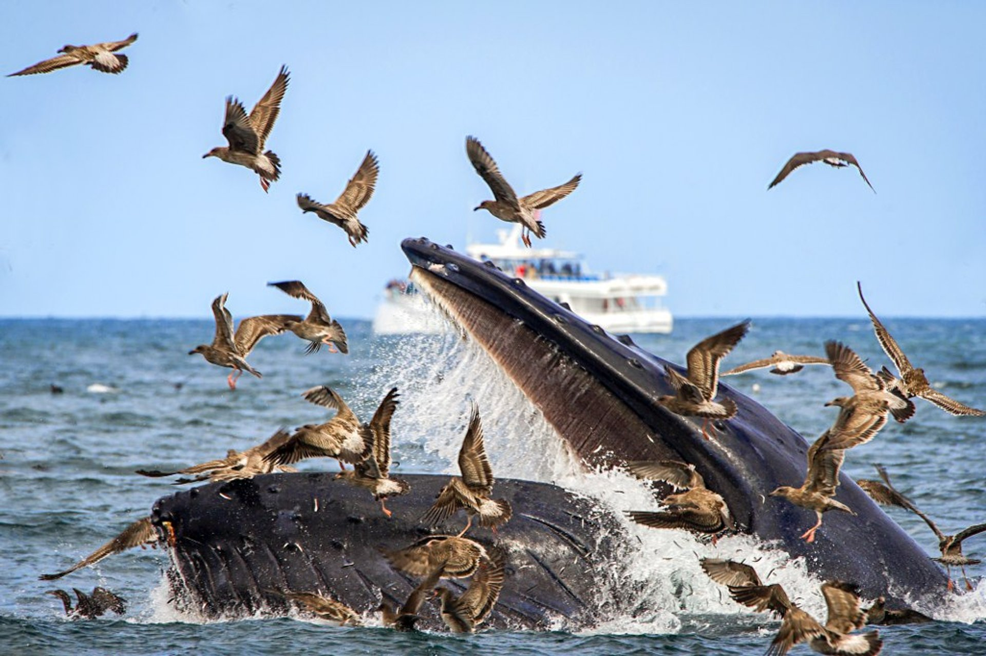 Whale Watching in California 2020 - Best Time