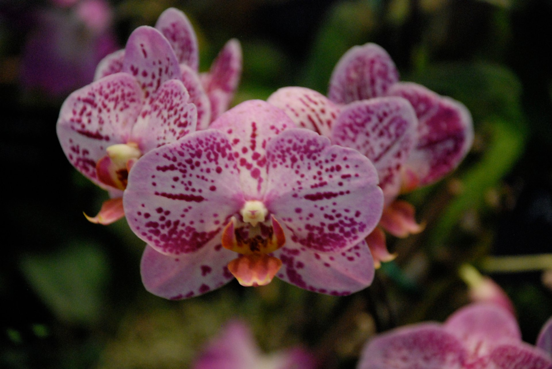 Orchid Bloom in Kenya 2020 - Best Time