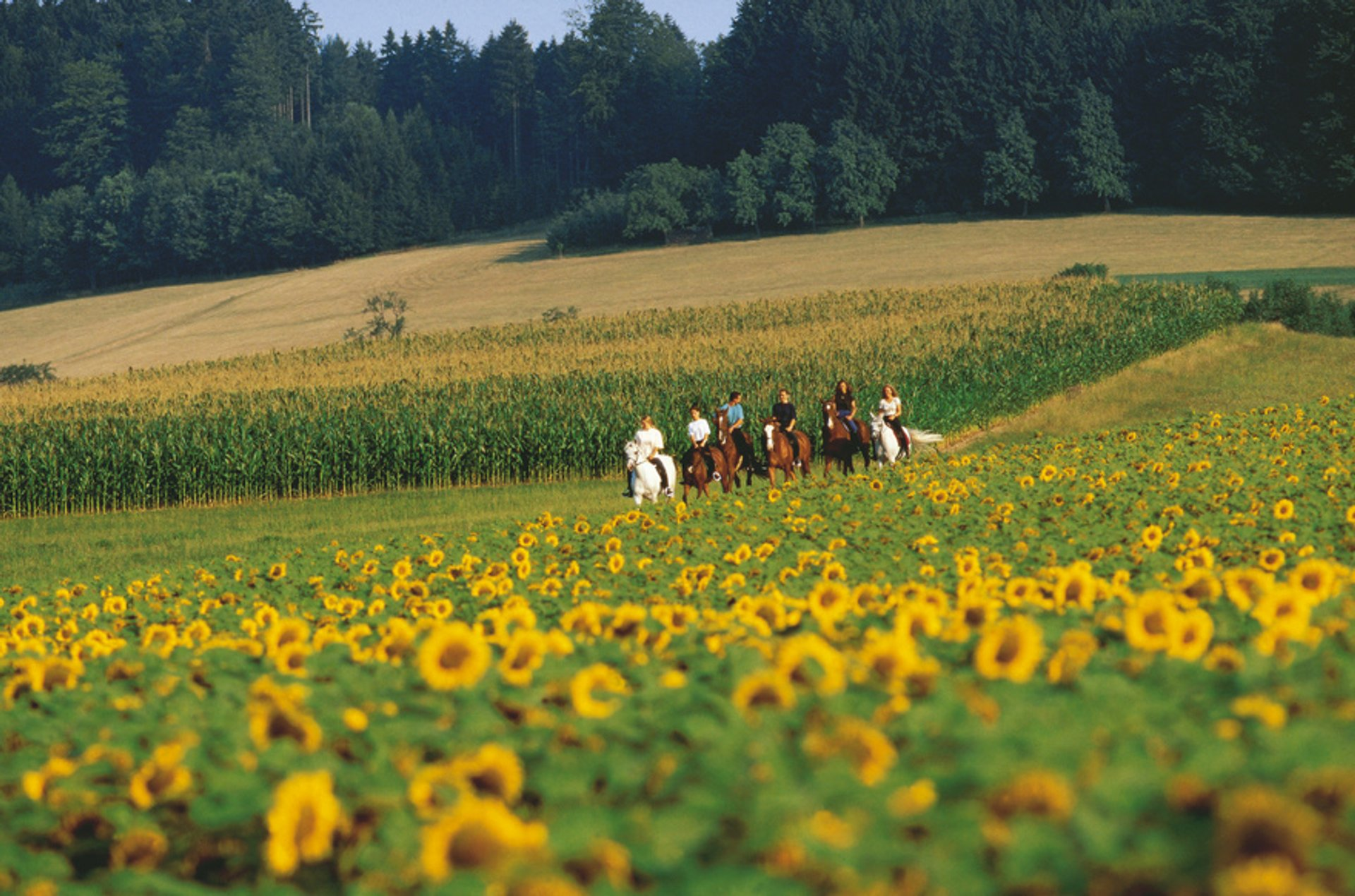 Horse Riding in Austria - Best Season 2020