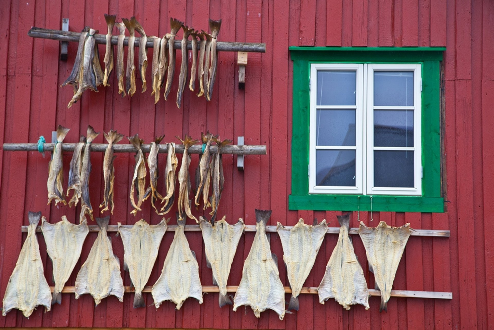 Dry Fish Rack in Norway 2020 - Best Time