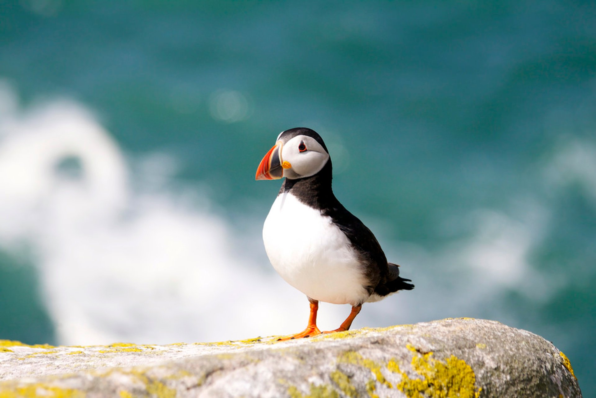 Watching Puffins in Ireland 2020 - Best Time