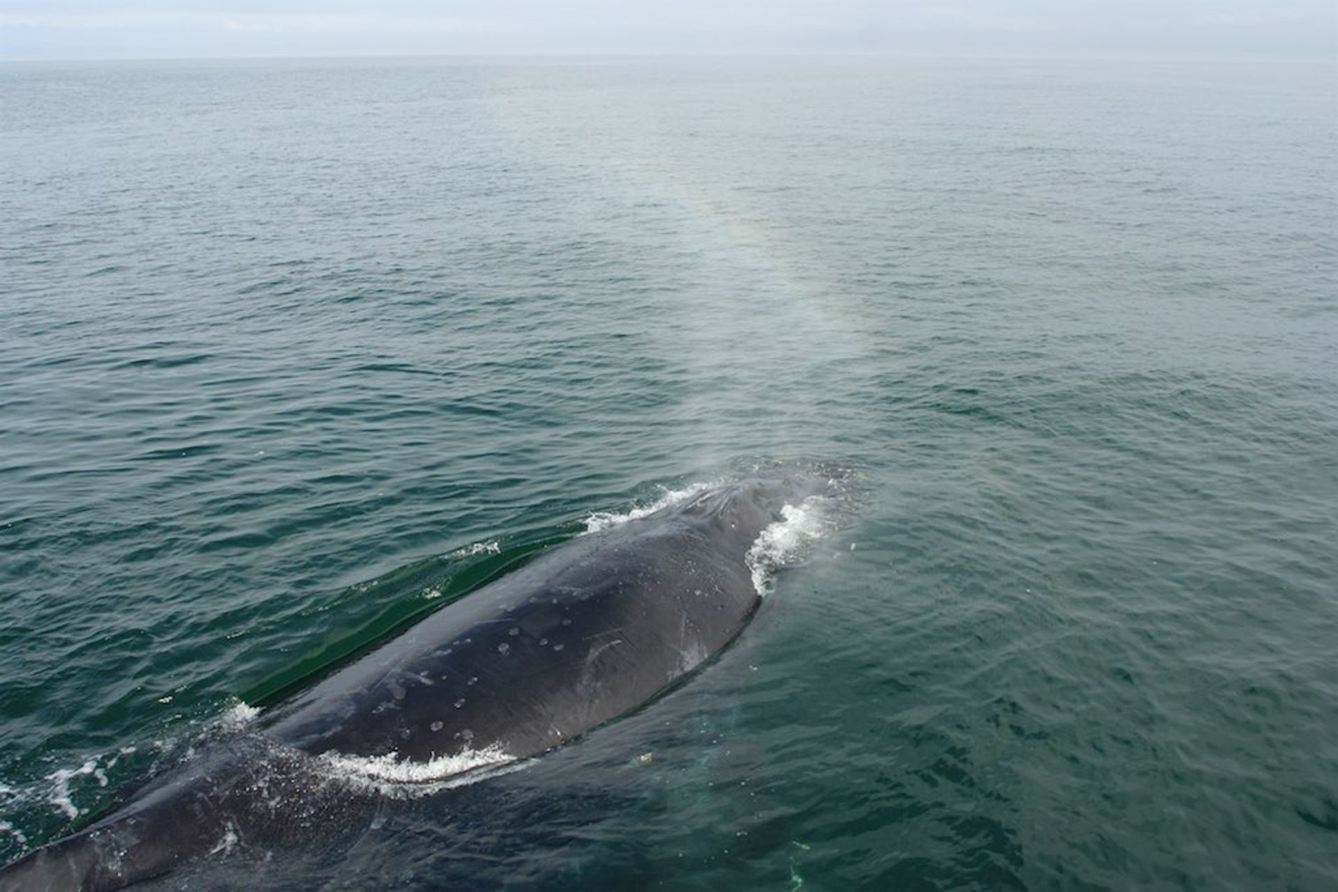 Whale Watching in California - Best Season 2020