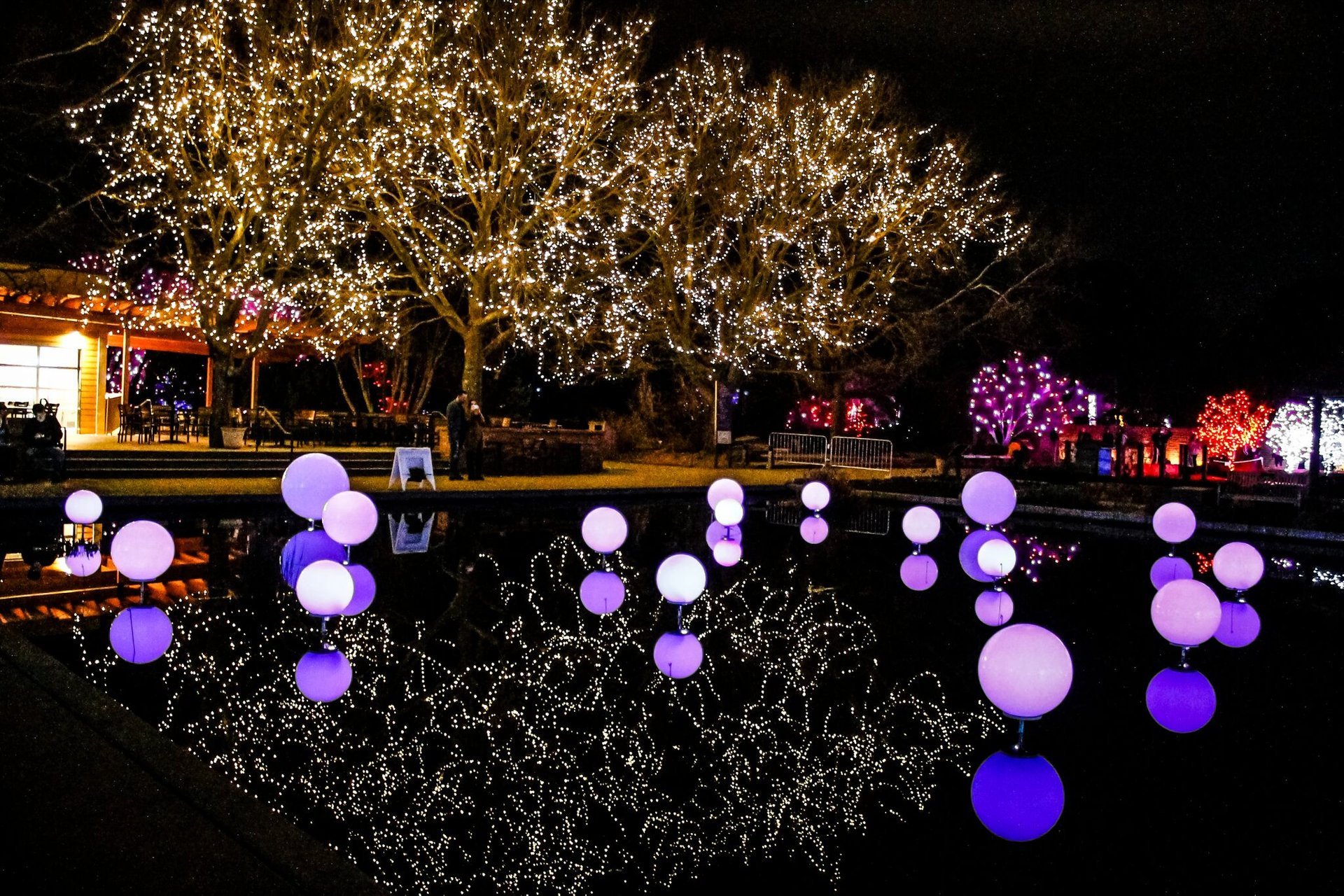 Blossoms of Light, Denver Botanic Gardens 2020