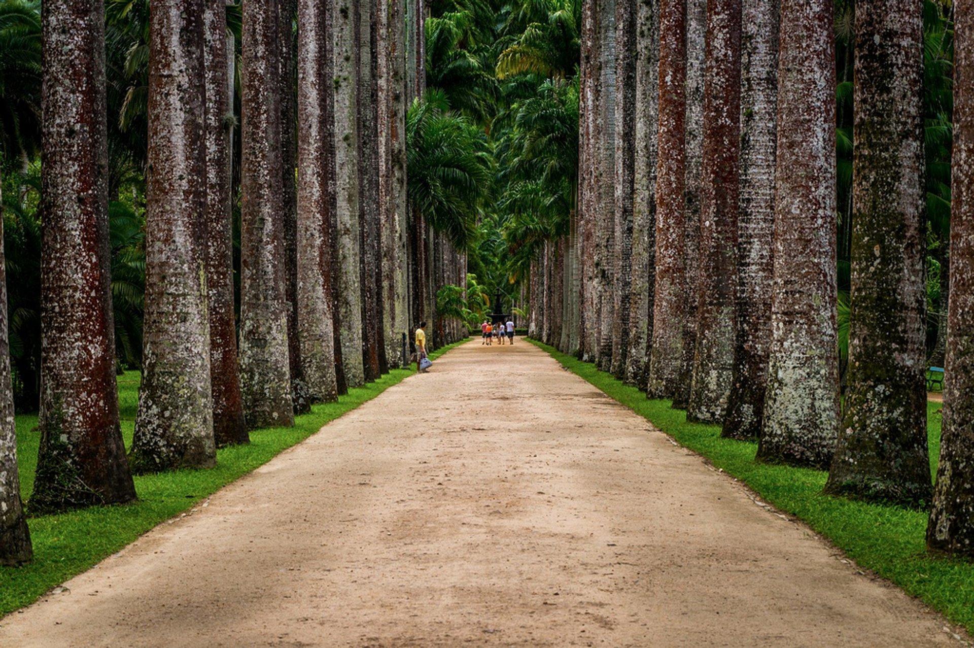 Botanical Garden or Jardim Botânico in Rio de Janeiro - Best Season 2020