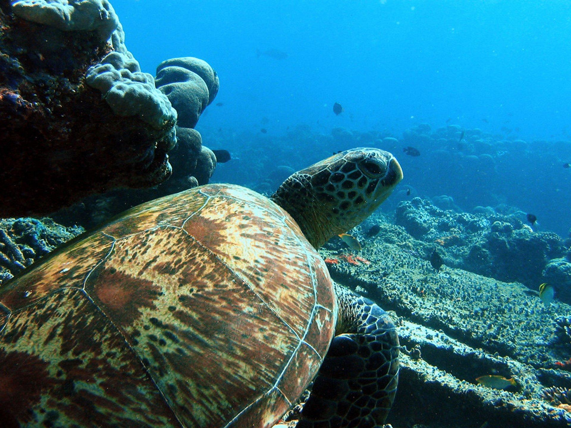 Scuba Dive in Singapore 2020 - Best Time