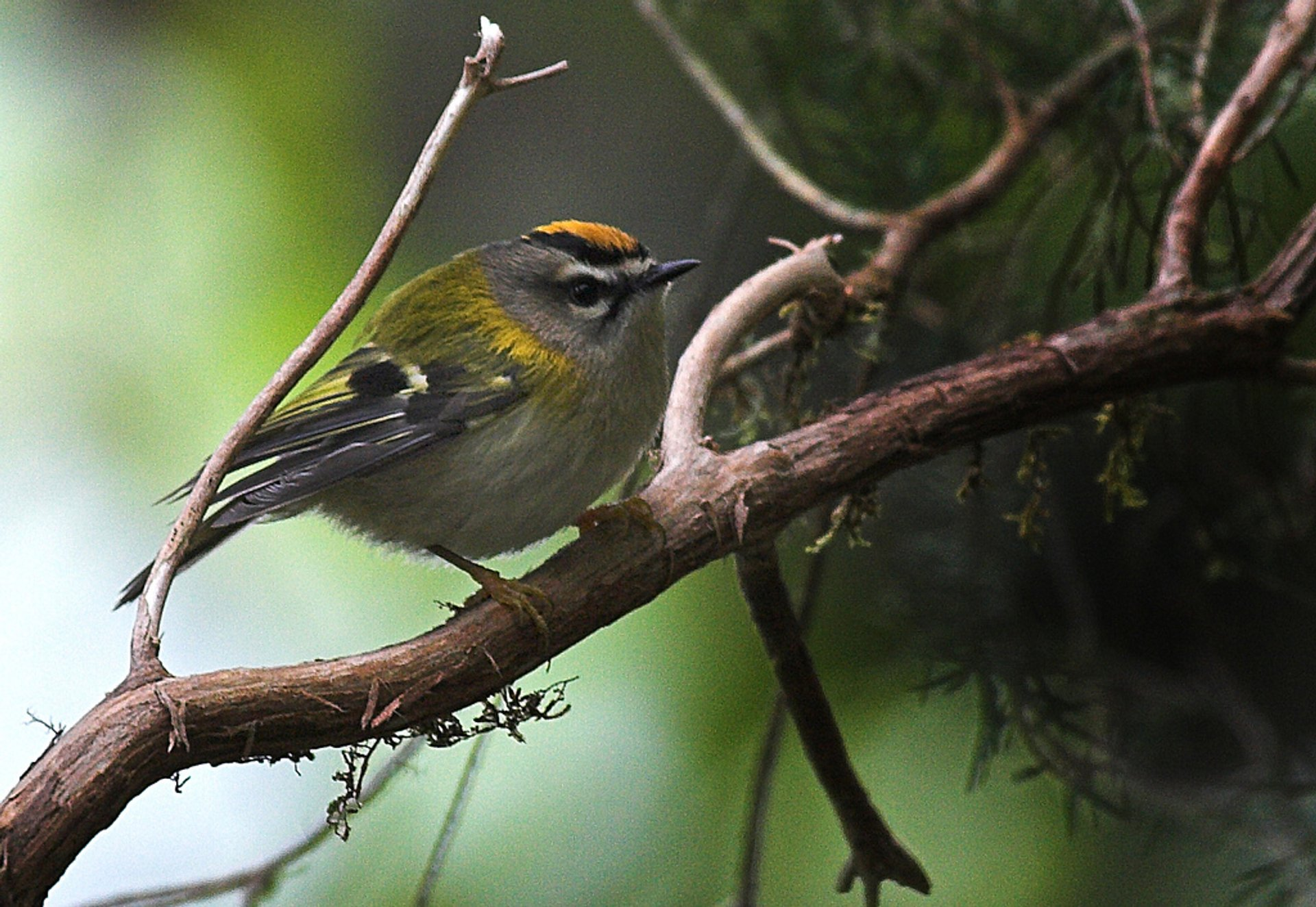 Best time to see Birdwatching in Madeira 2020