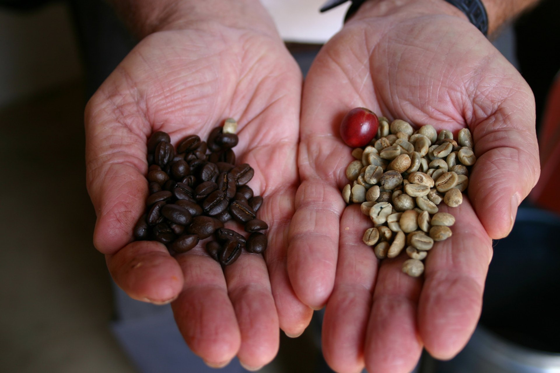 Coffee Bean Harvesting in Rio de Janeiro 2019 - Best Time