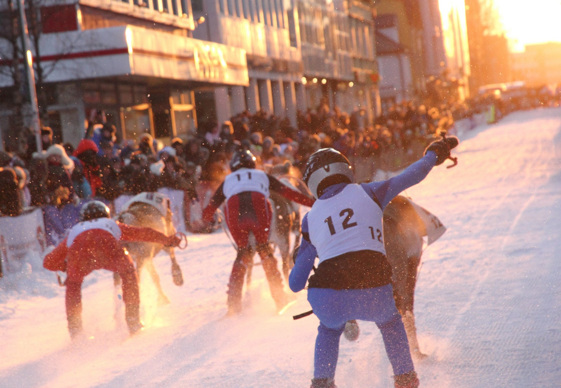 Reindeer race in Tromsø 2020