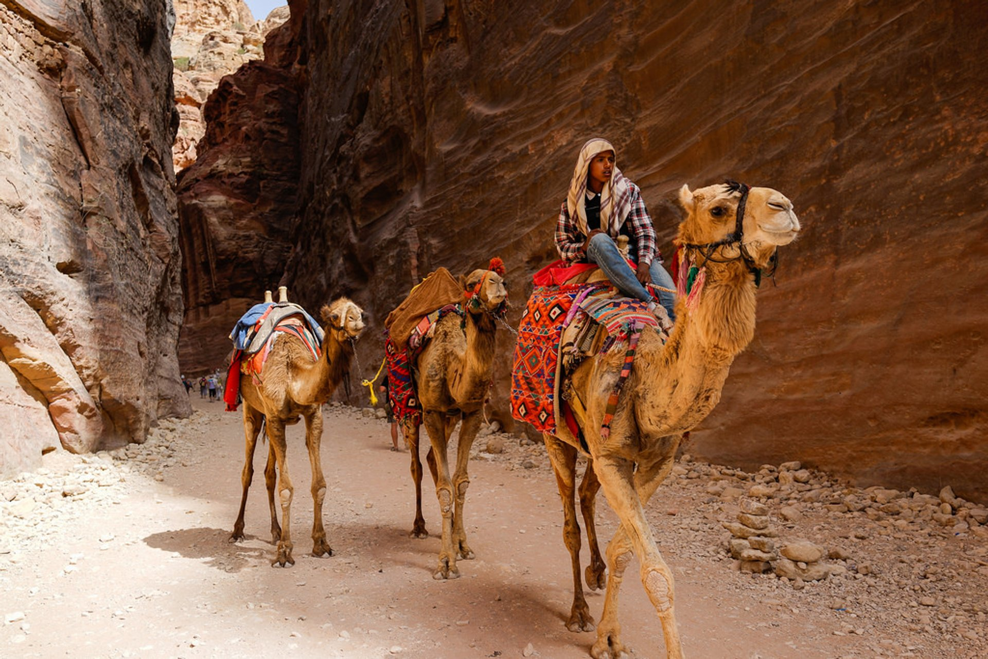 Camel Safari in Jordan 2020 - Best Time