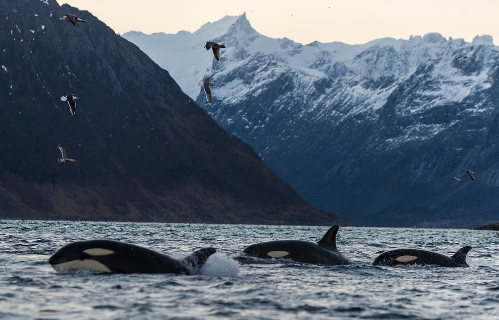 Whale Safari in Norway 2020 - Best Time