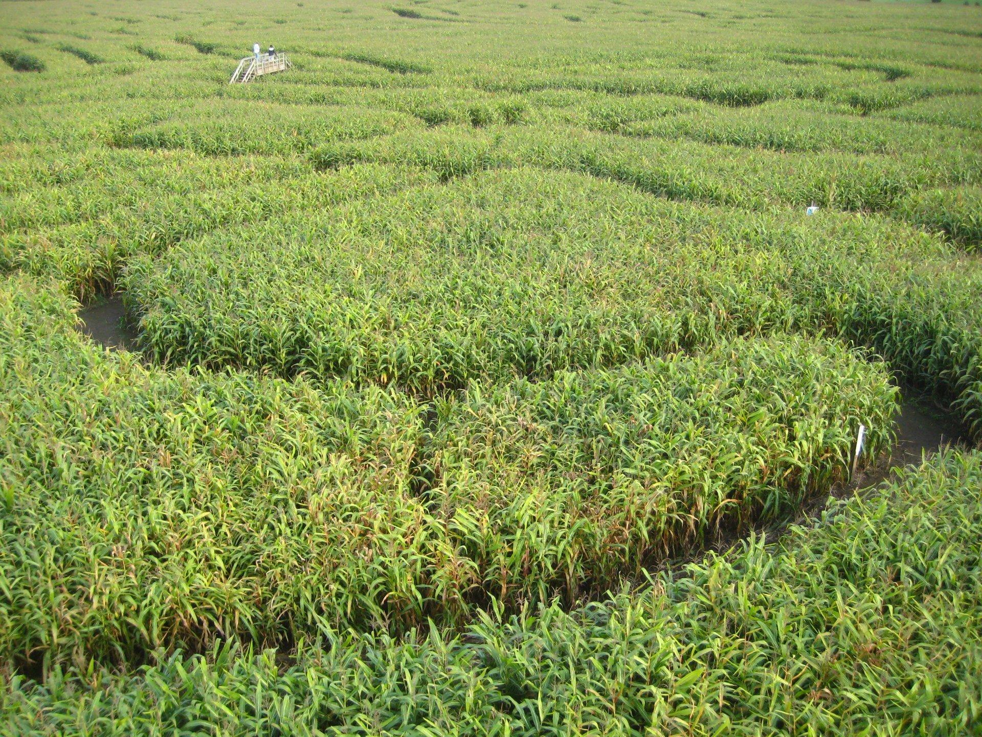 Richardson Adventure Farm Corn Maze in Illinois - Best Season 2020