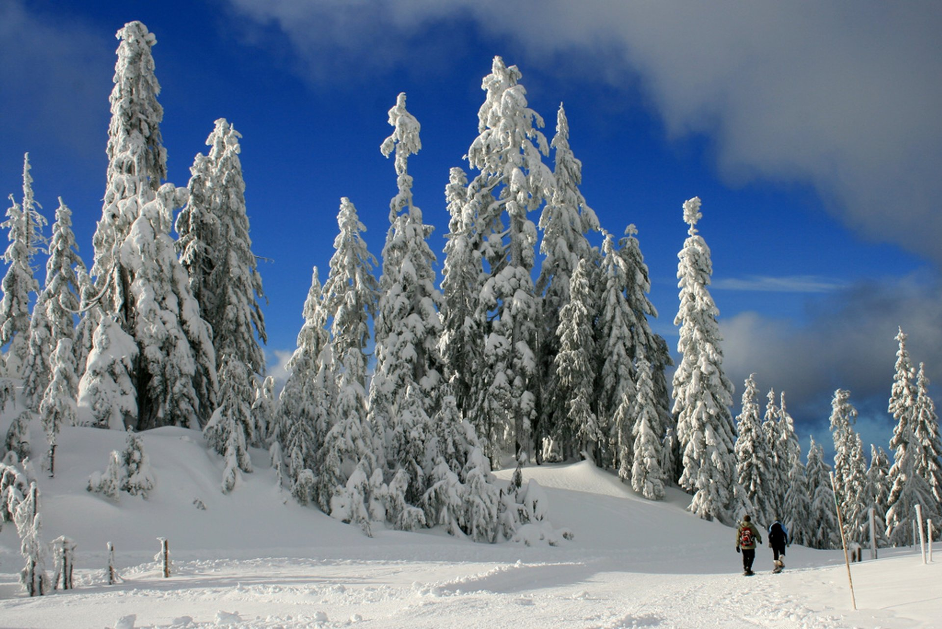 There was thick layer of snow on a snowshoeing trail on Grouse Mountain. 2020