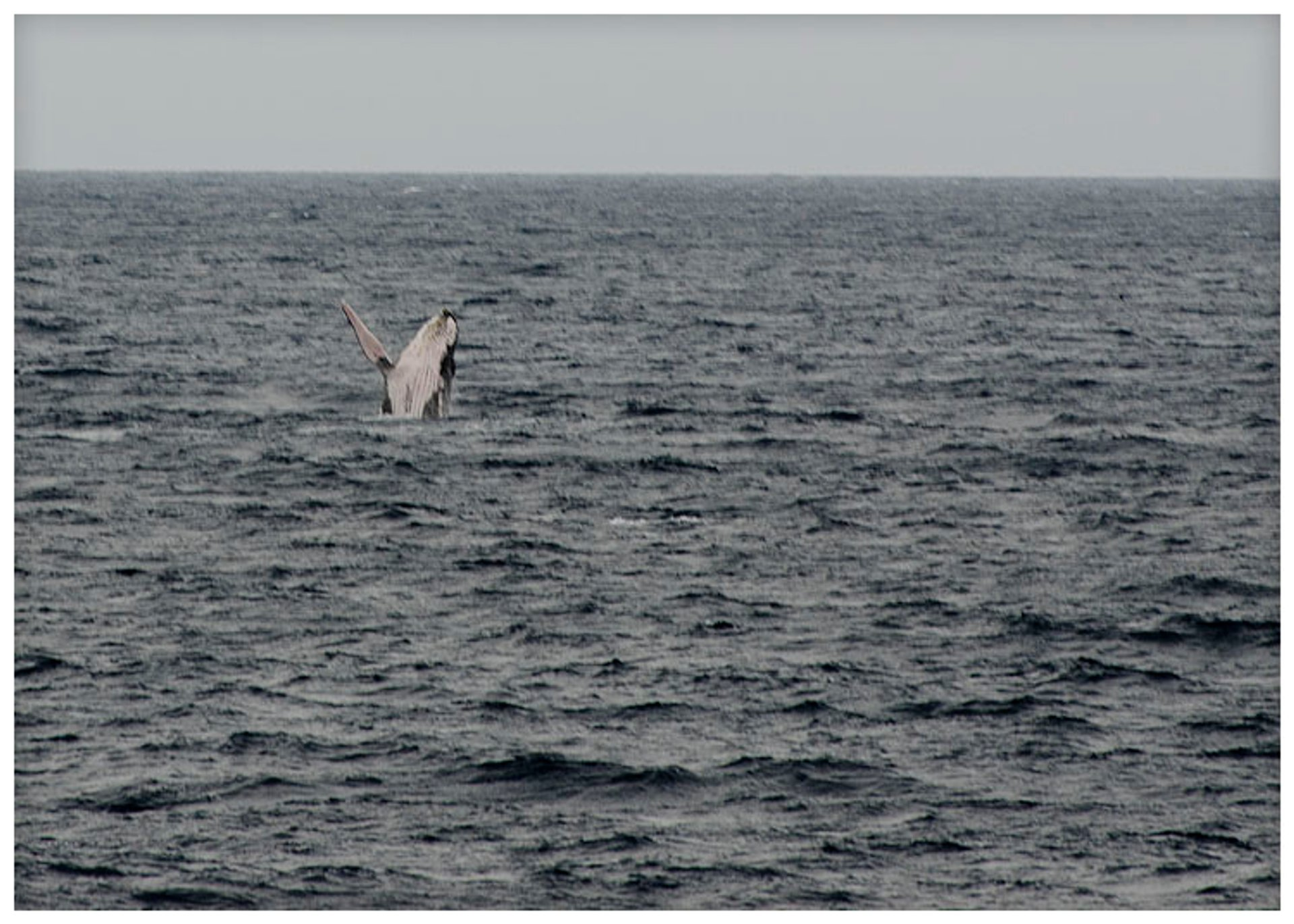 Humpback Whale Watching Season in Zanzibar - Best Time