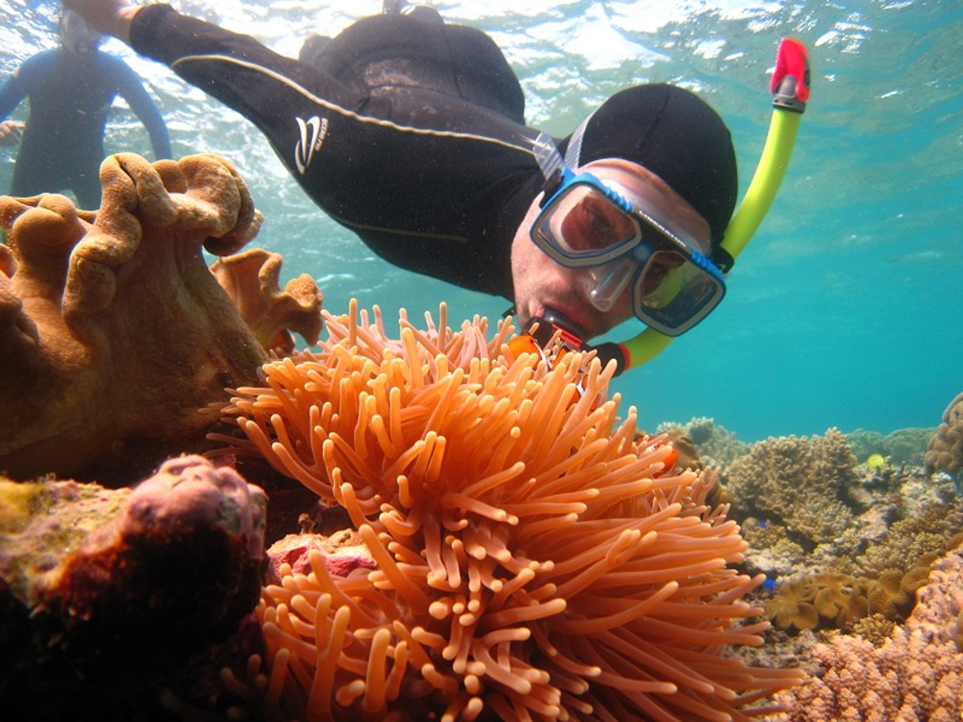Diving and Snorkelling in Great Barrier Reef 2019 - Best Time