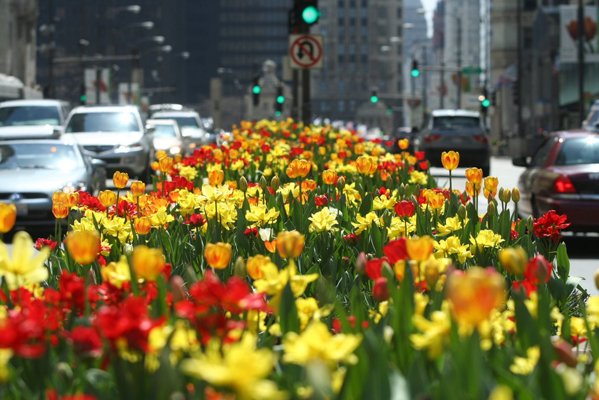 Spring in Chicago 2020 - Best Time
